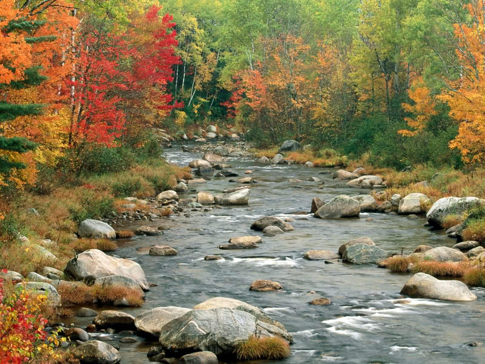 autumn nature river - photo #1