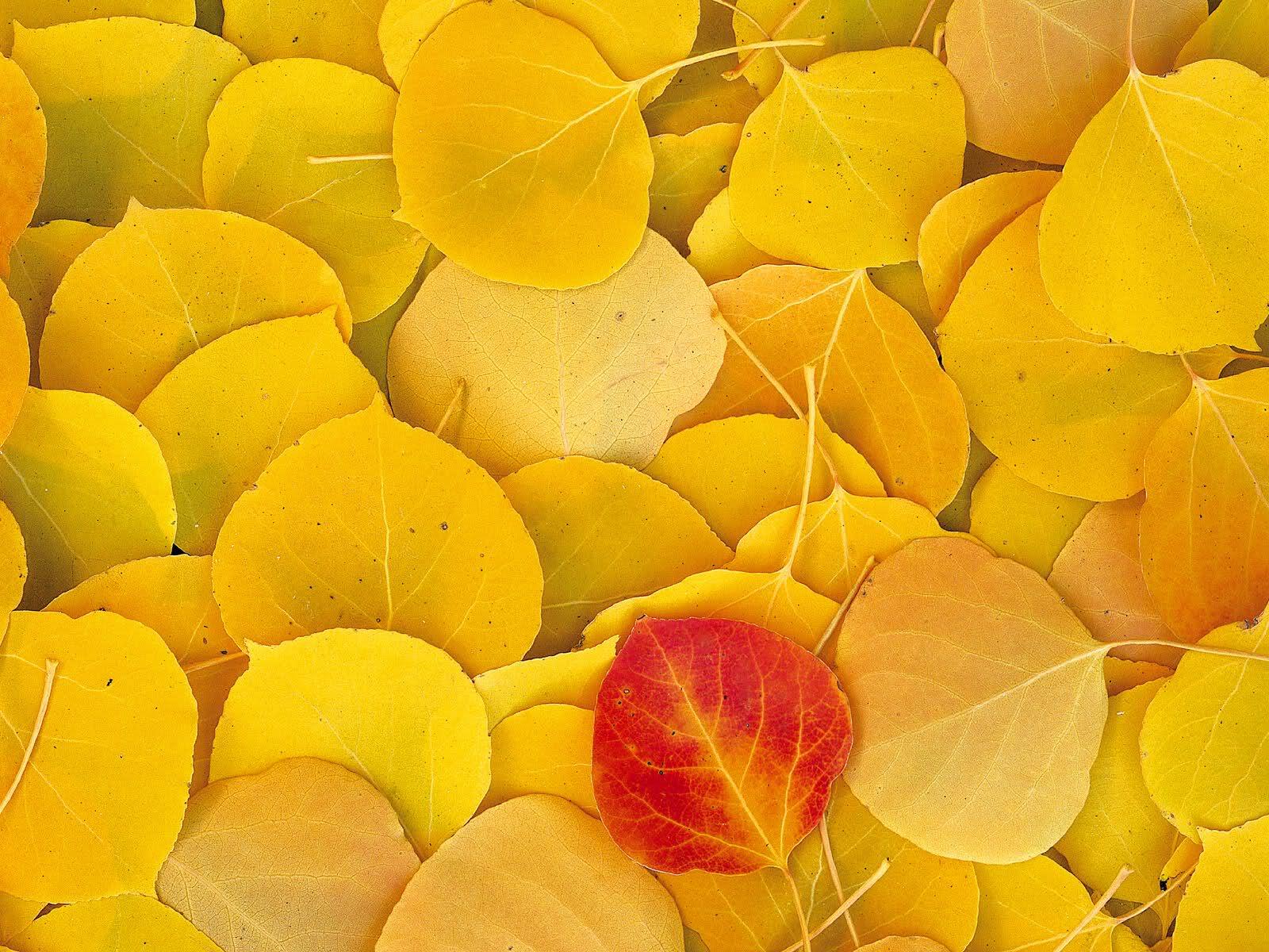 Leaves Wallpaper 9
