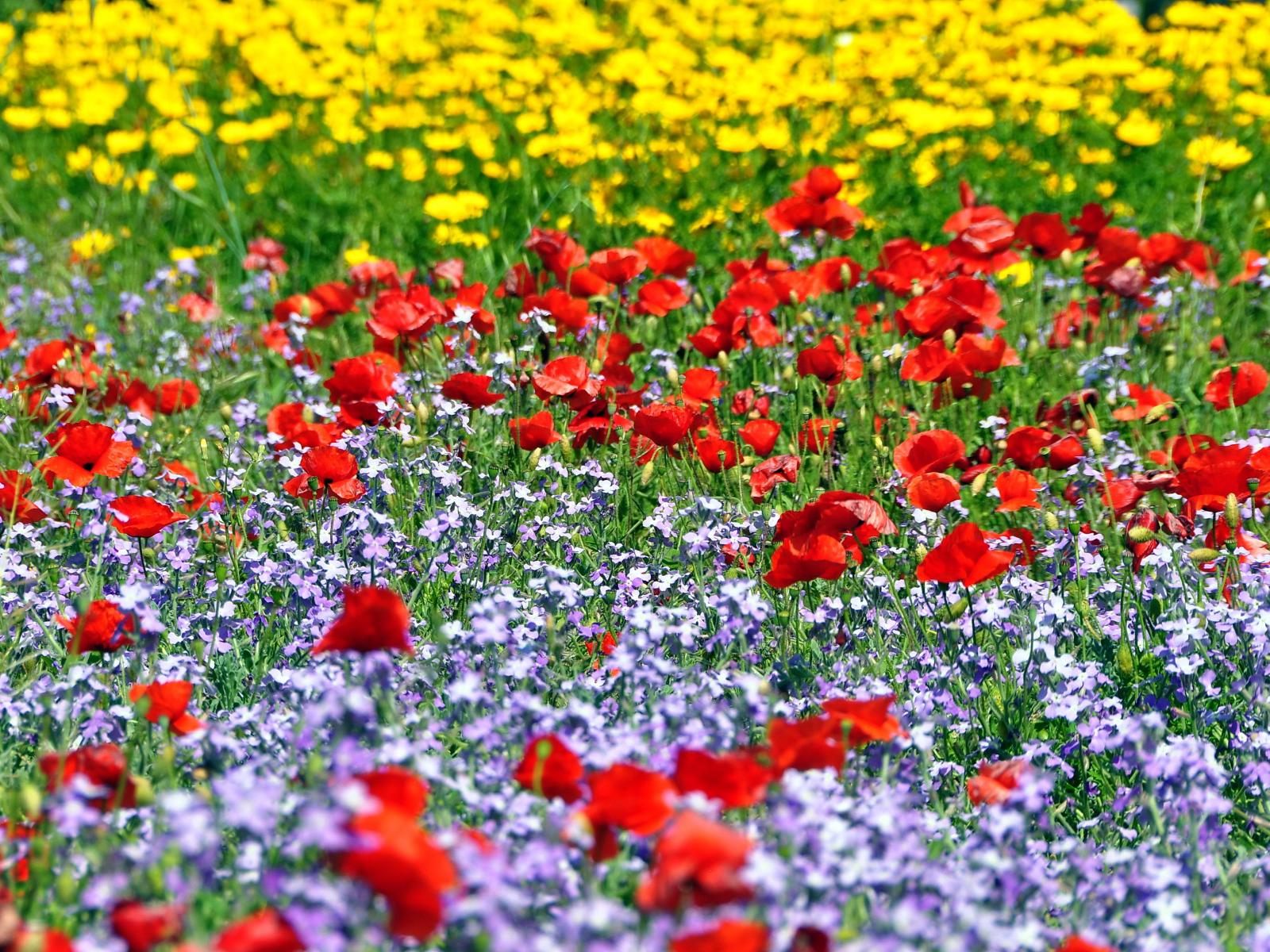 Поляна красивых цветов