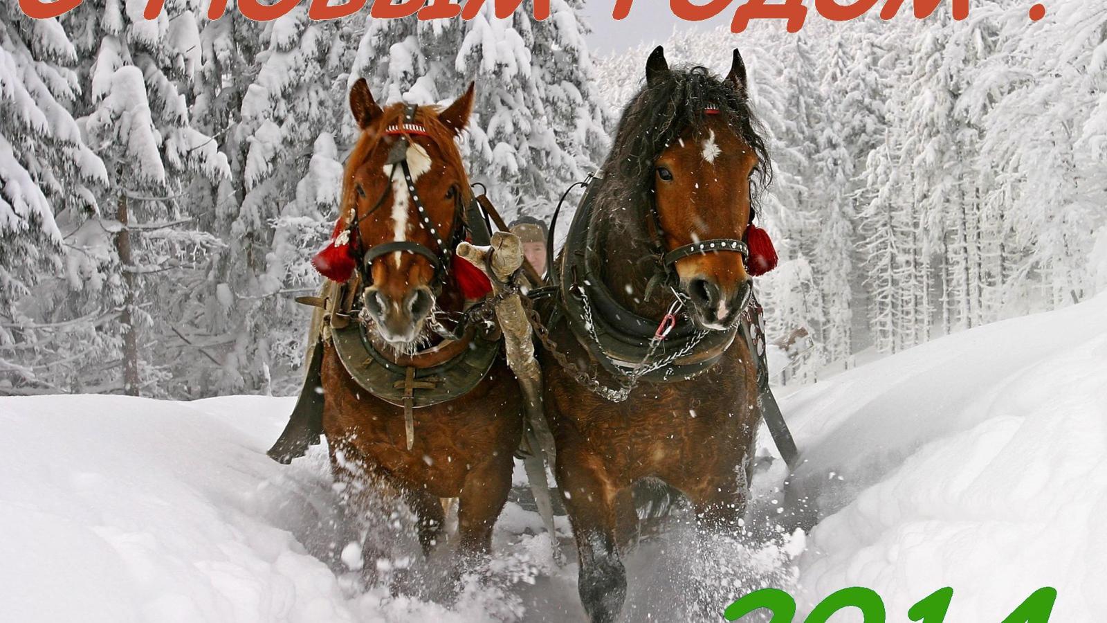 обои для рабочего стола зимние лошади № 465187 без смс