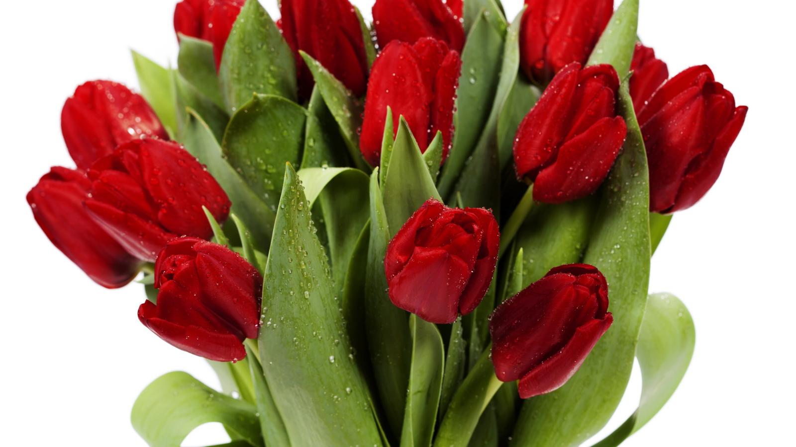 Картинки красных тюльпанов, днем врача картинки