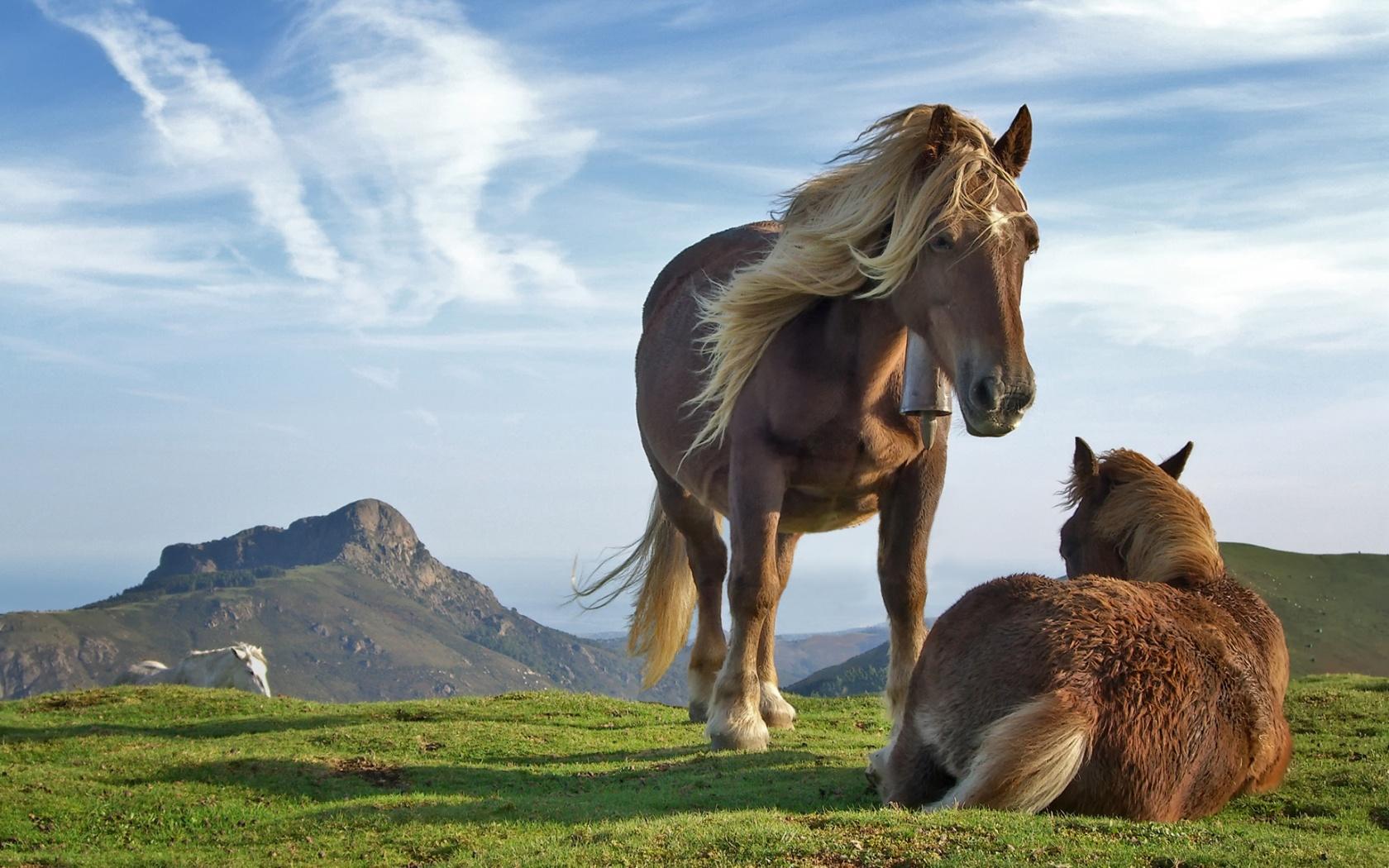 Zastaki.com - Horse
