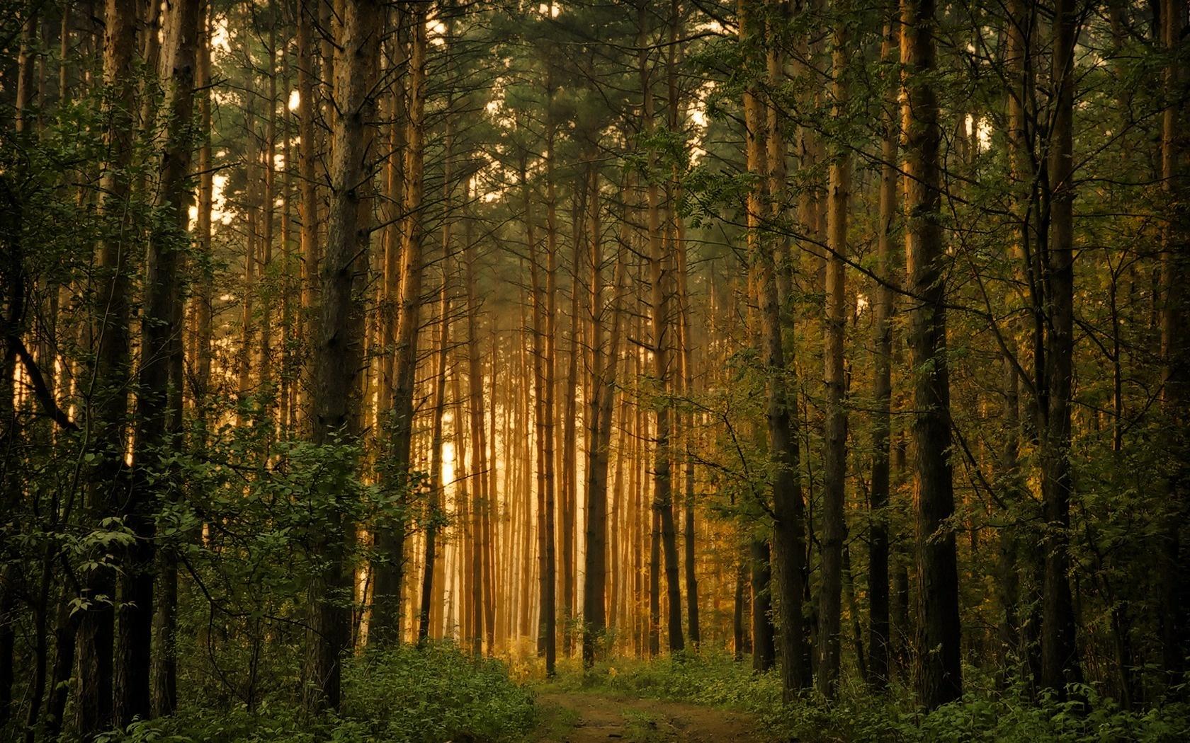 Восточноевропейский лес.