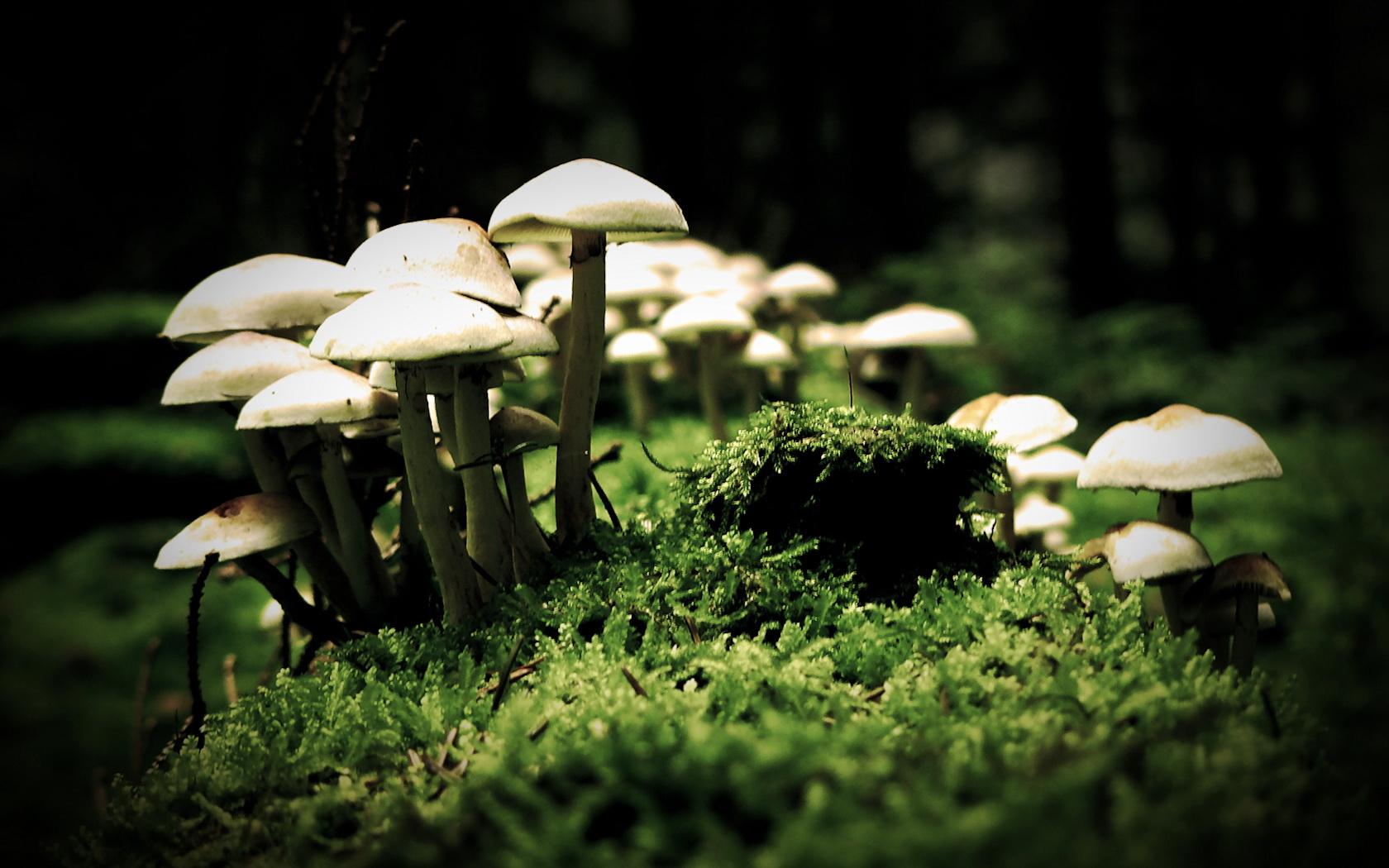 Nature_Mushrooms_Mushroom_cap_014661_.jp