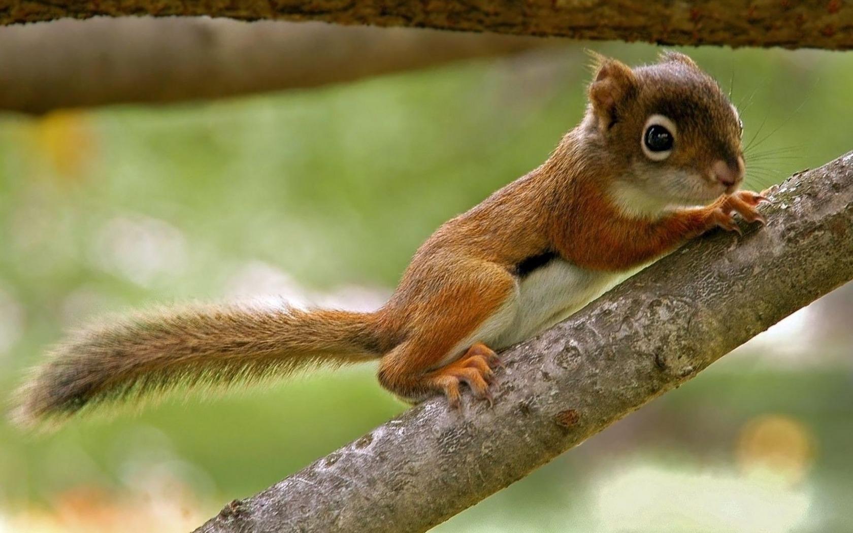 Chipmunk Small Squirrel Like HD Desktop Wallpaper | WallpaperCow.com