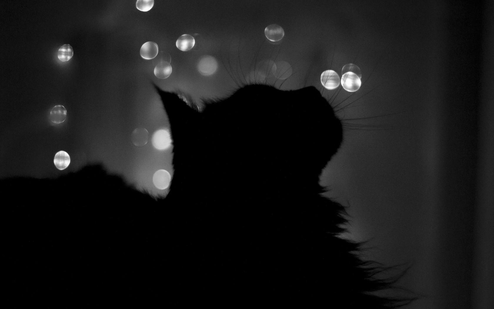 cat shade cats wallpapers desktop dark background hd animals stars