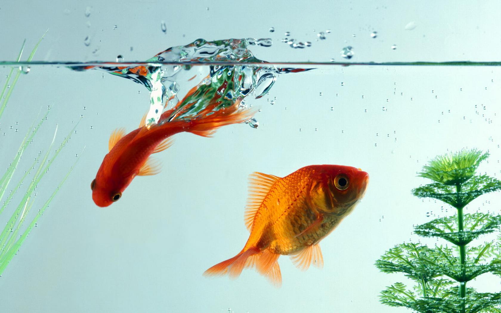 виды аквариум рыбок фото