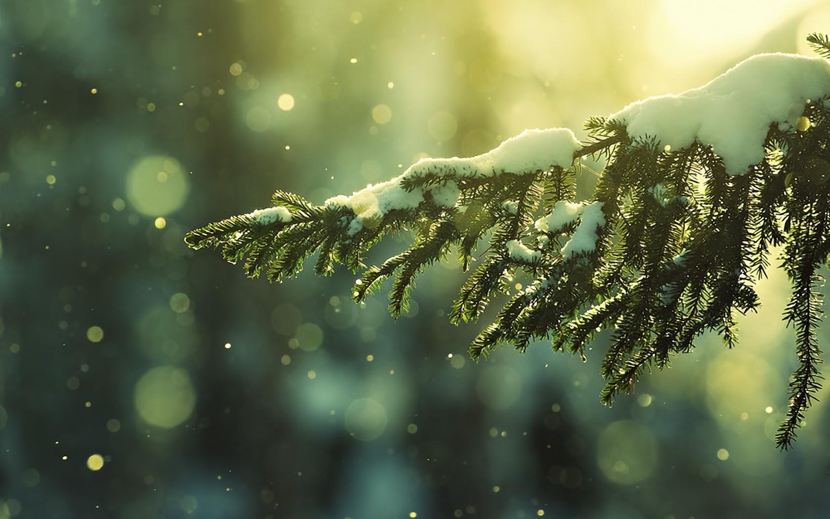 Previous, Holidays - Christmas wallpapers - Christmas Snow wallpaper
