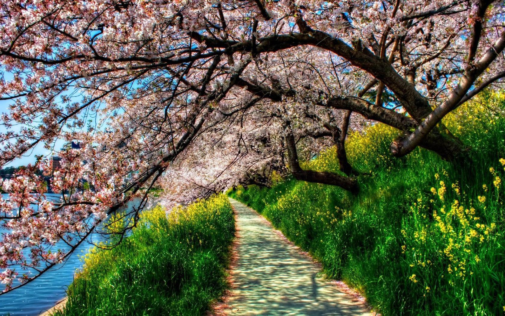 Весна фото, школа