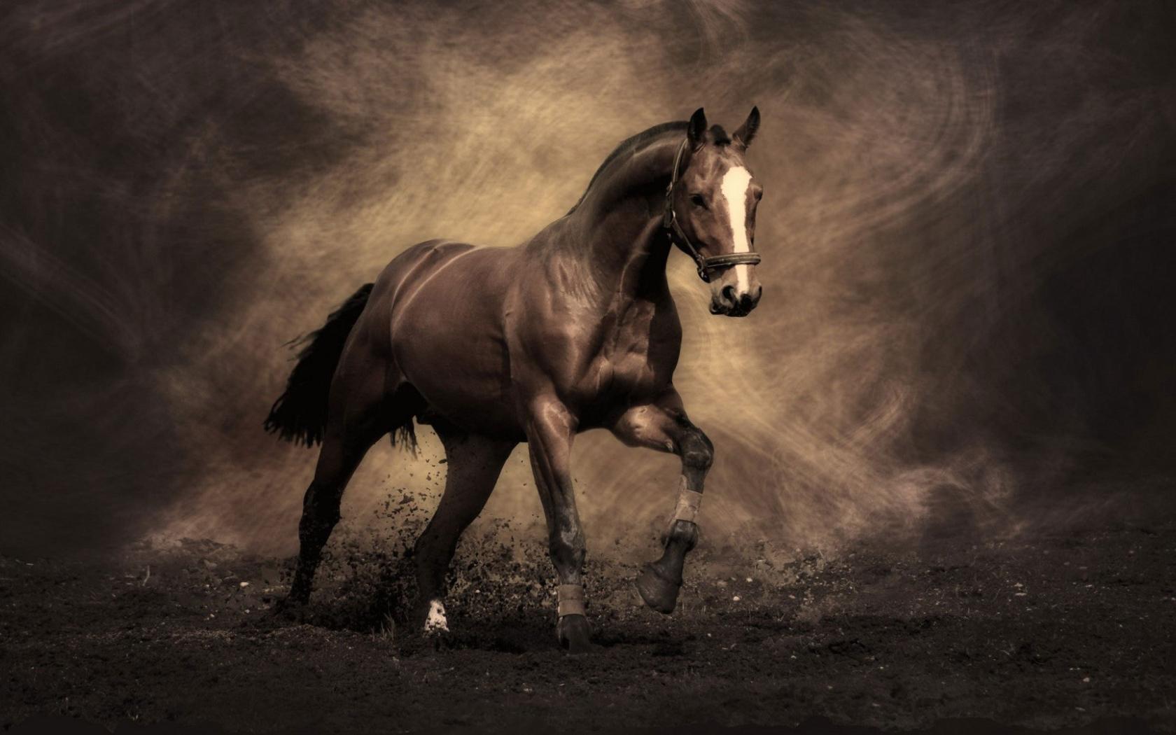 The Most Famous Horses Desktop Wallpapers 1680x1050