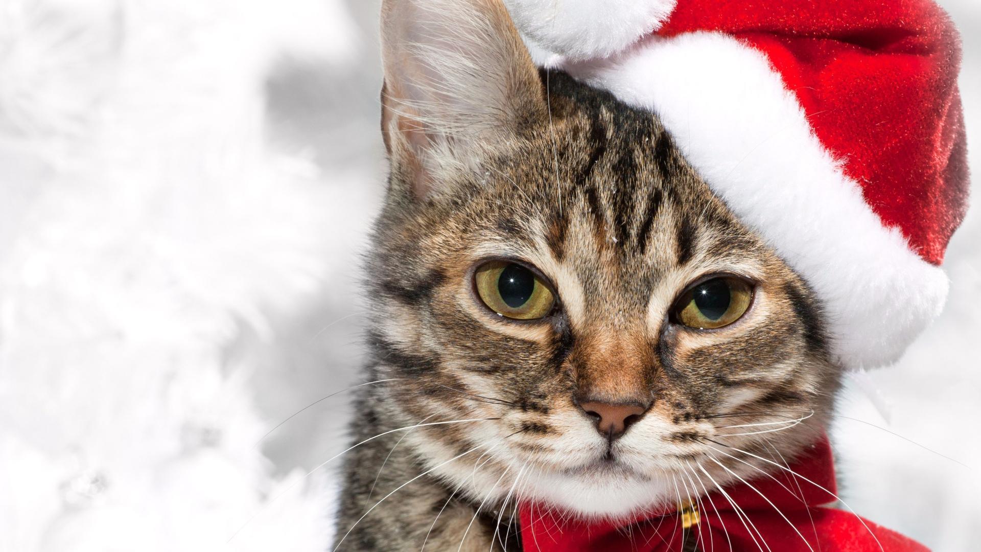 Christmas cat Desktop wallpapers 1920x1080