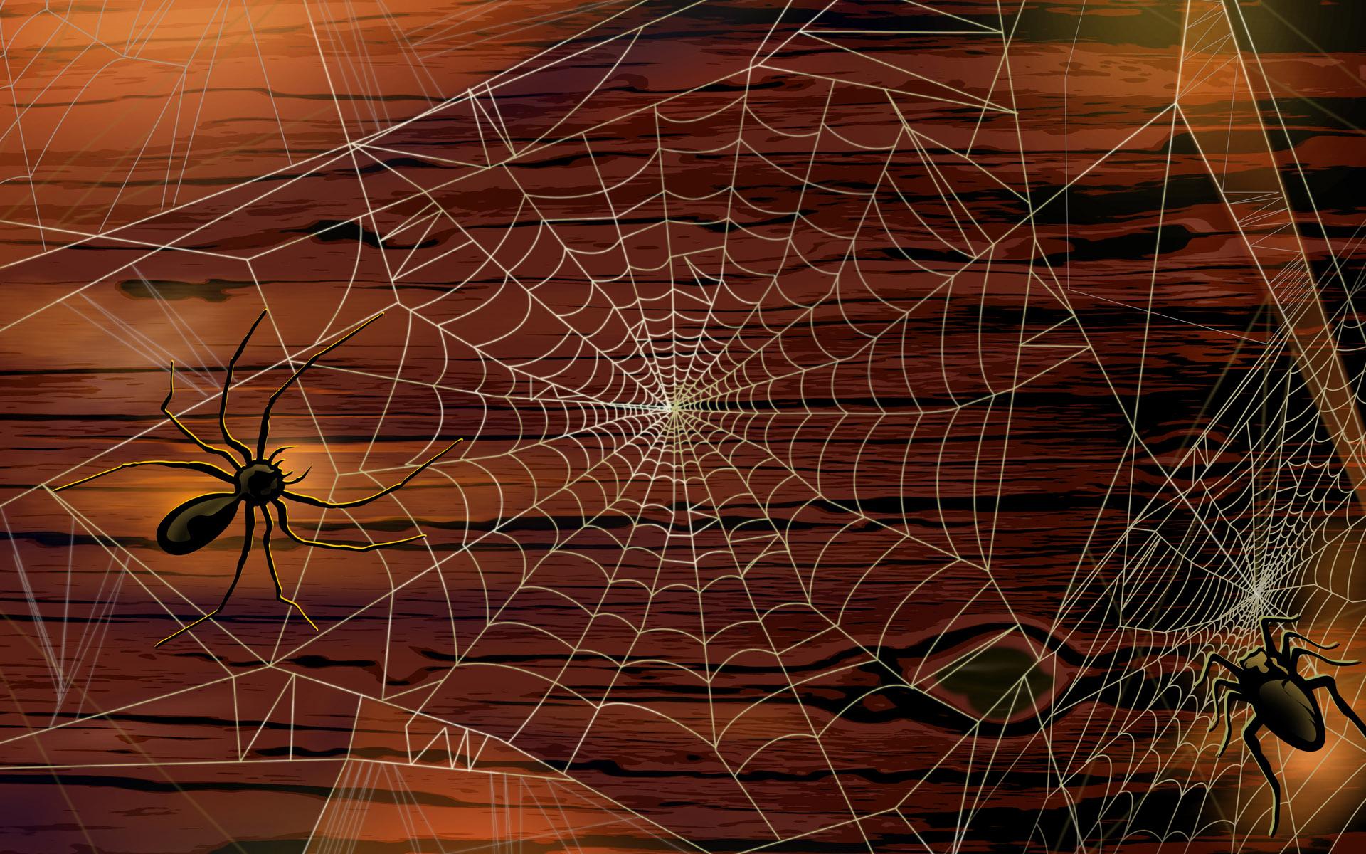 Картинки паучки с паутиной