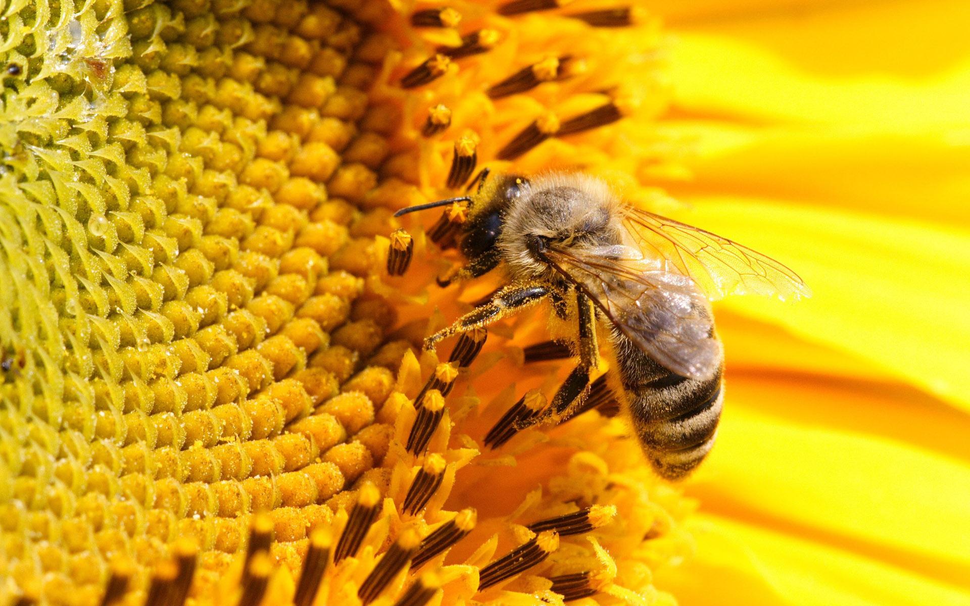 Картинки пчелы и мед, андроид картинку