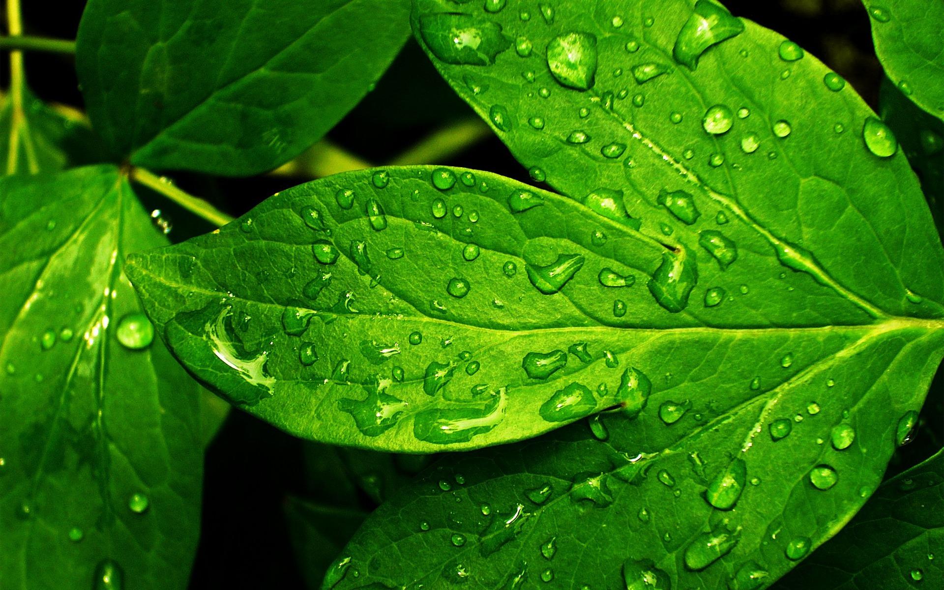 leaves fresh nature plants wallpapers desktop leaf water hd refreshing backgrounds cut