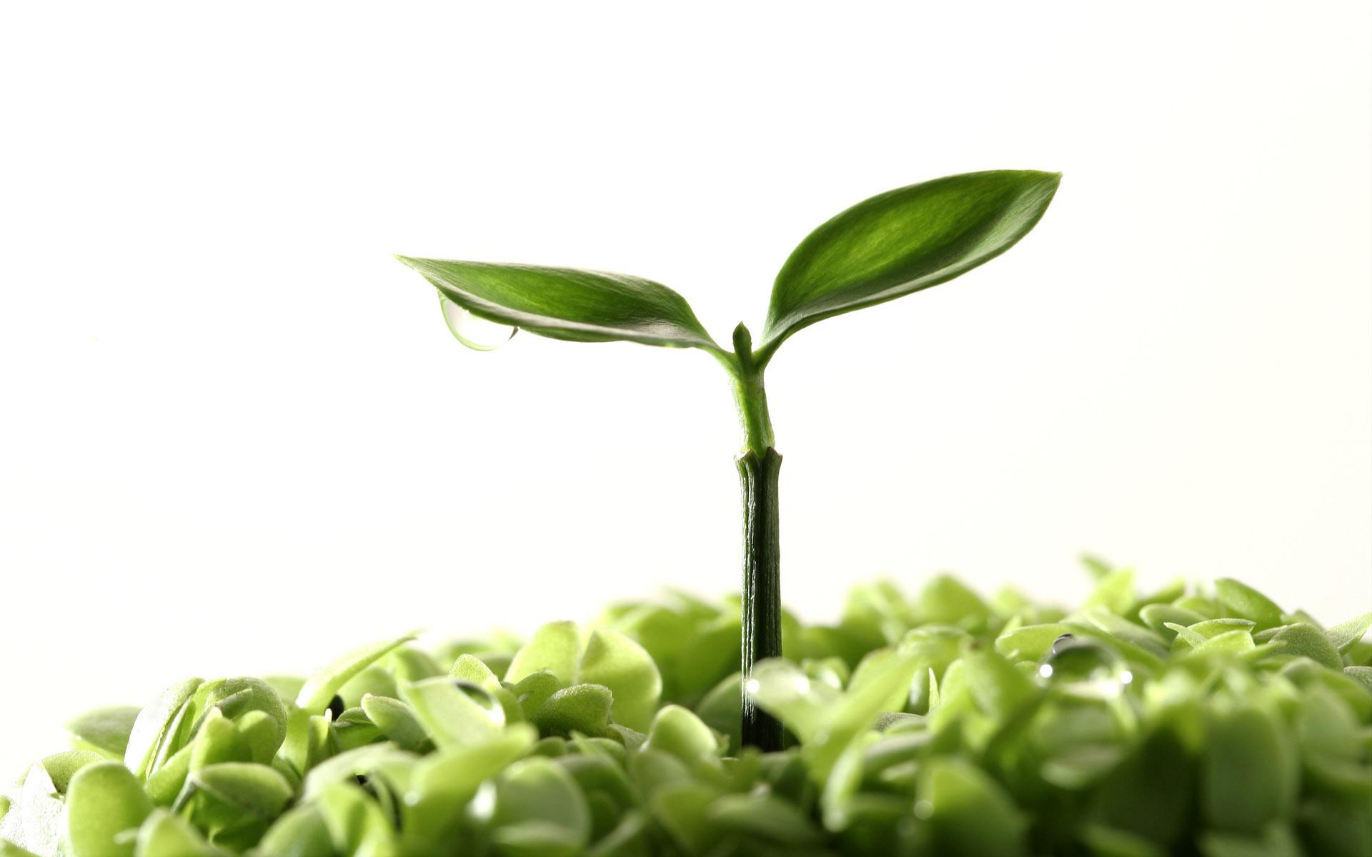 193k - jpg 1344 Plants Plants
