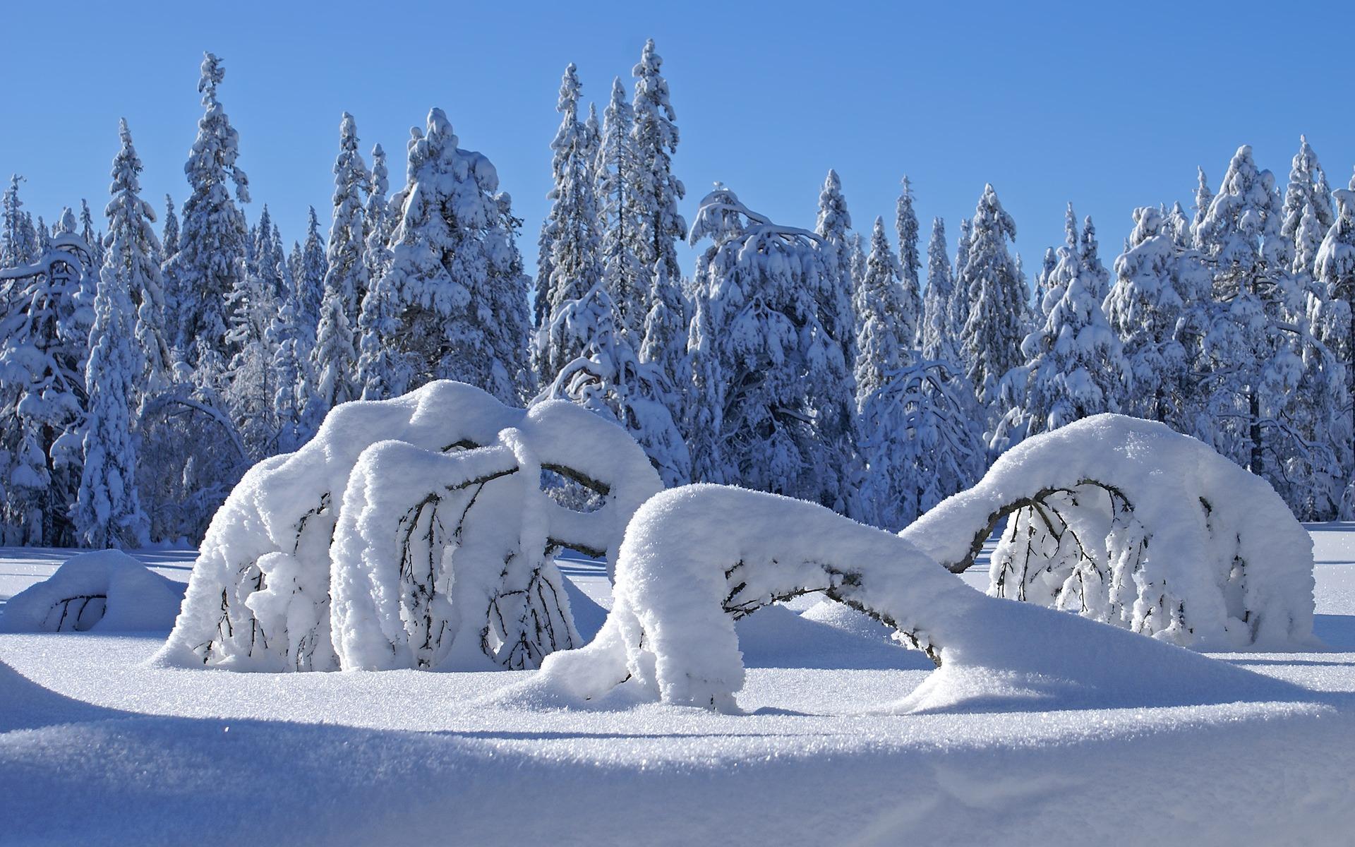snow winter seasons sea - photo #33