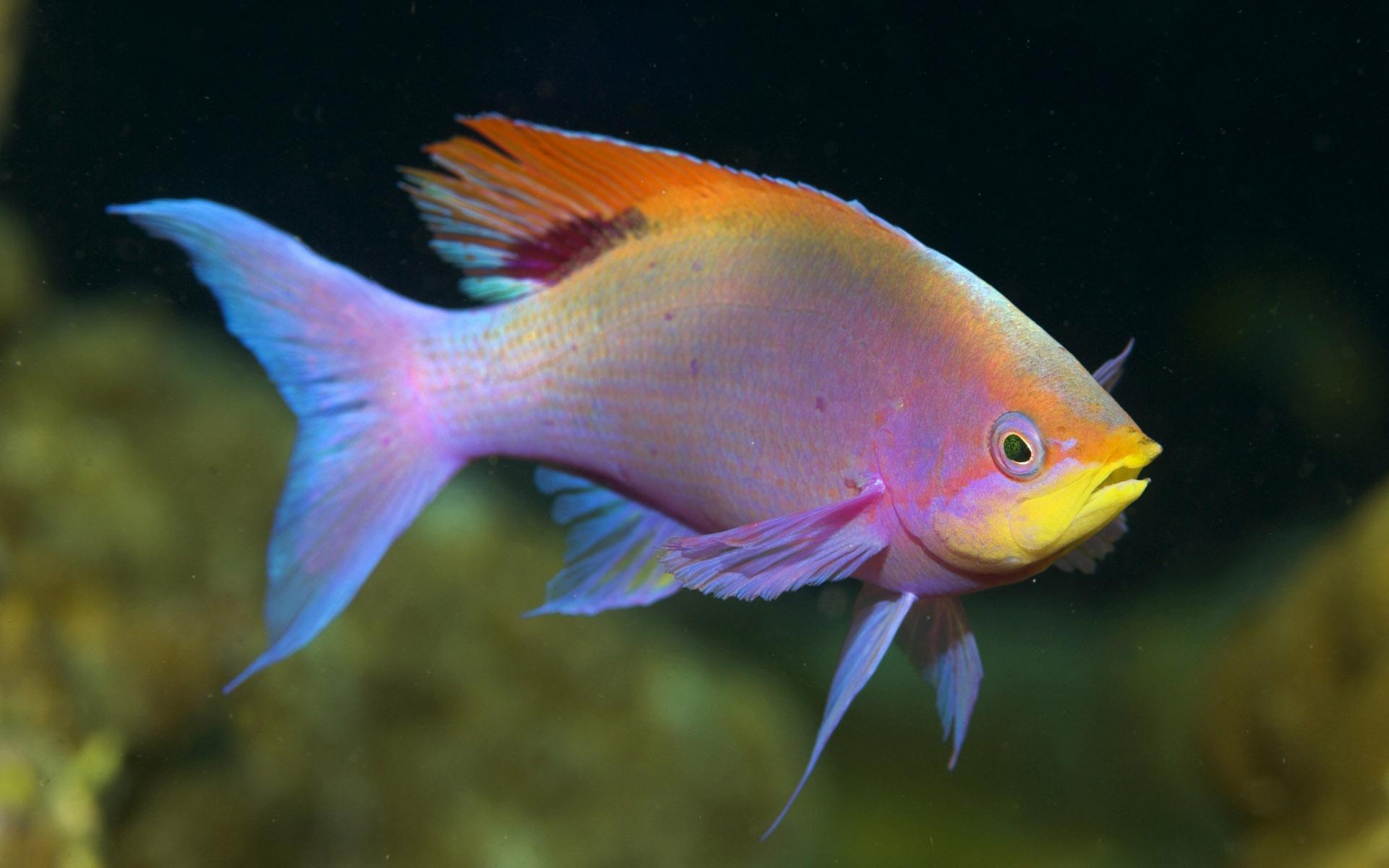 fish marlin desktop 1920x1200 - photo #33