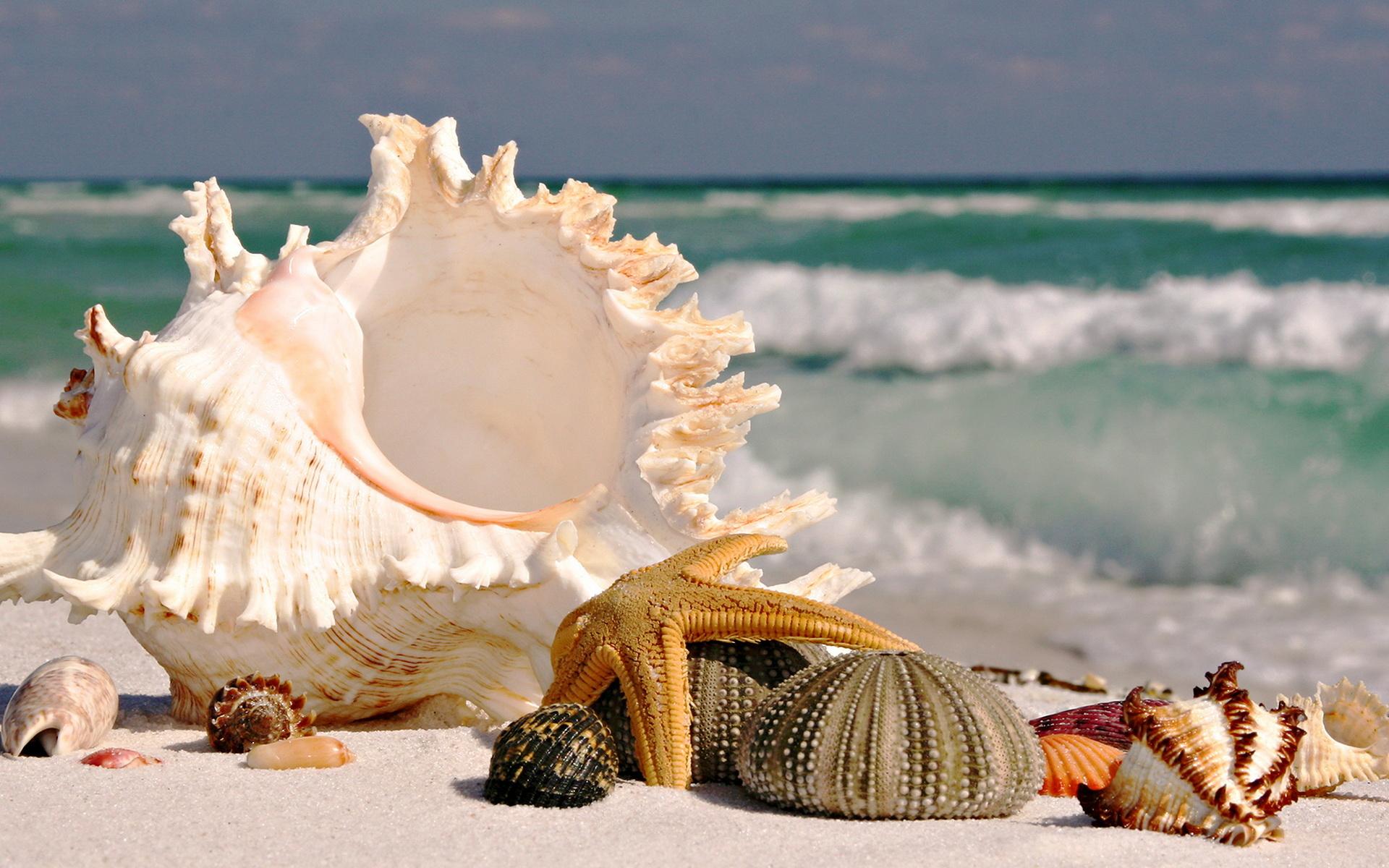 красивые картинки про море и ракушки времен дедушки