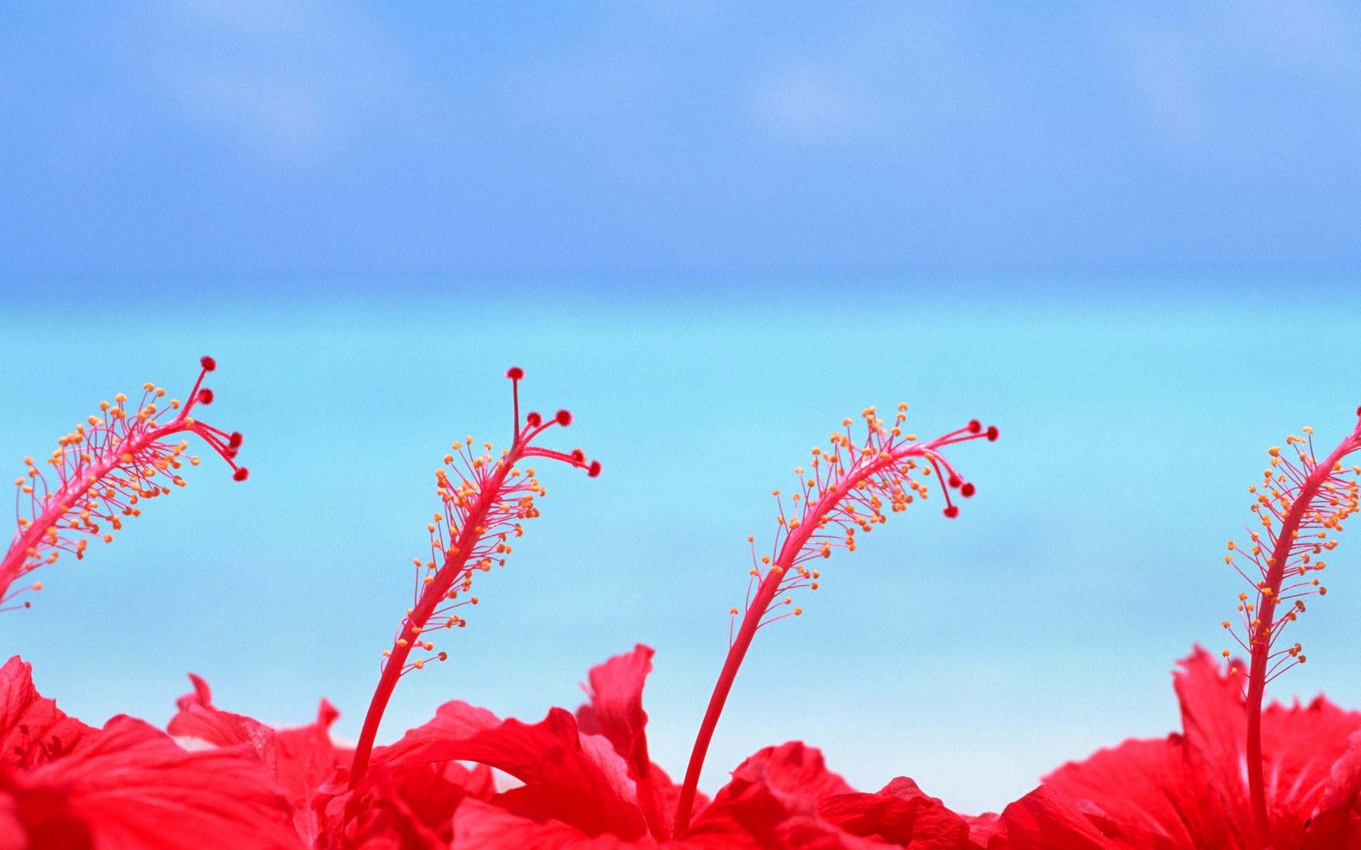 Красный и бирюзовый картинки