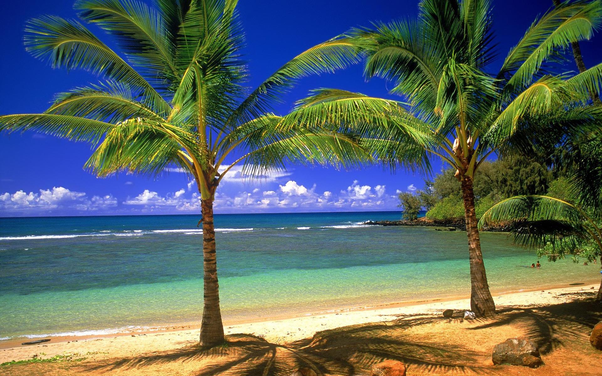 фото пальмы пляж