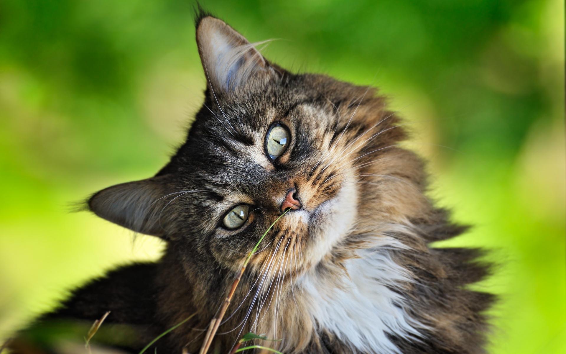 https://www.zastavki.com/pictures/1920x1200/2011/Animals_Cats_Cat_person_029589_.jpg