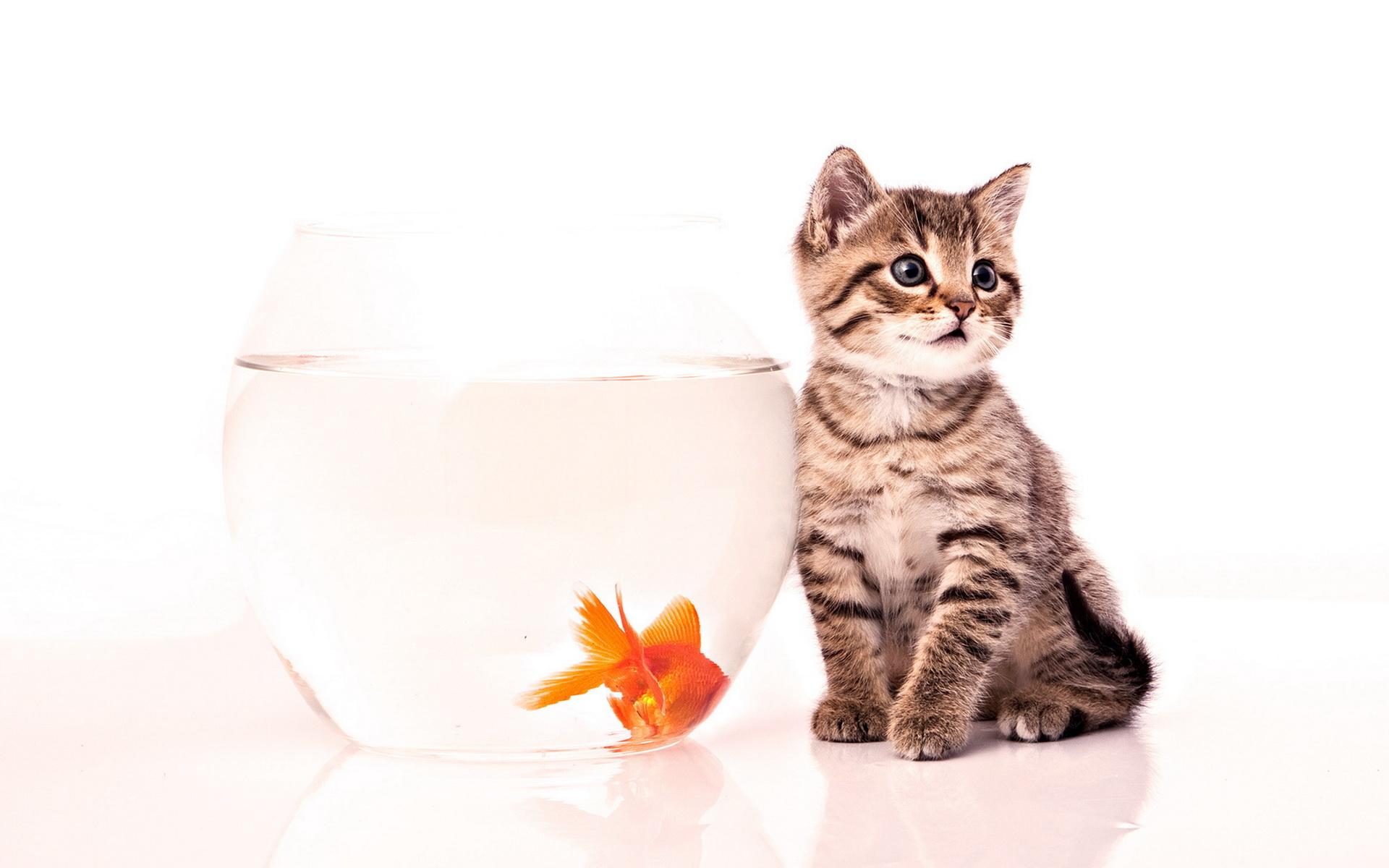 Various Kitten Kompilation