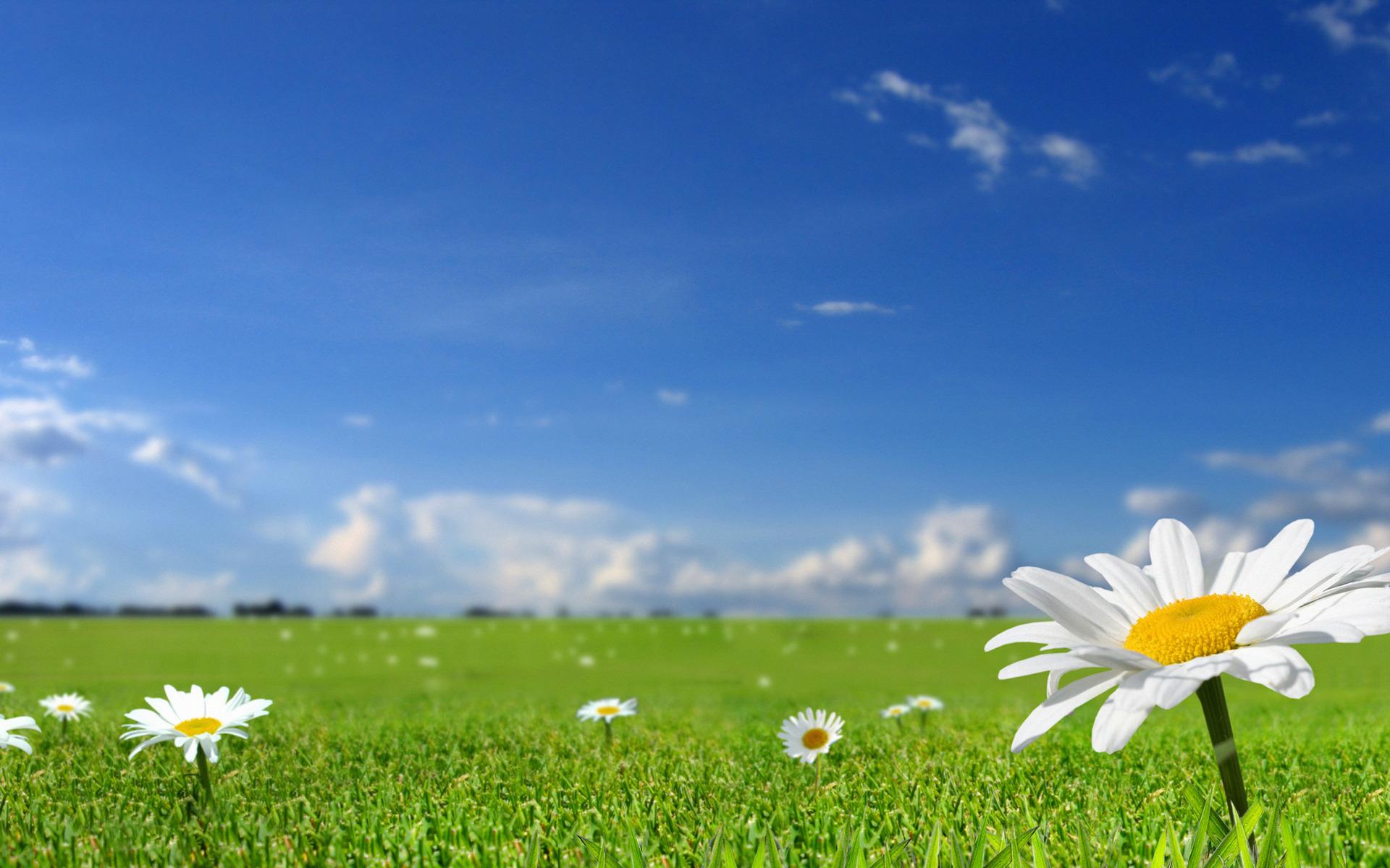 Красивые картинки природы и цветов на рабочий стол, картинки