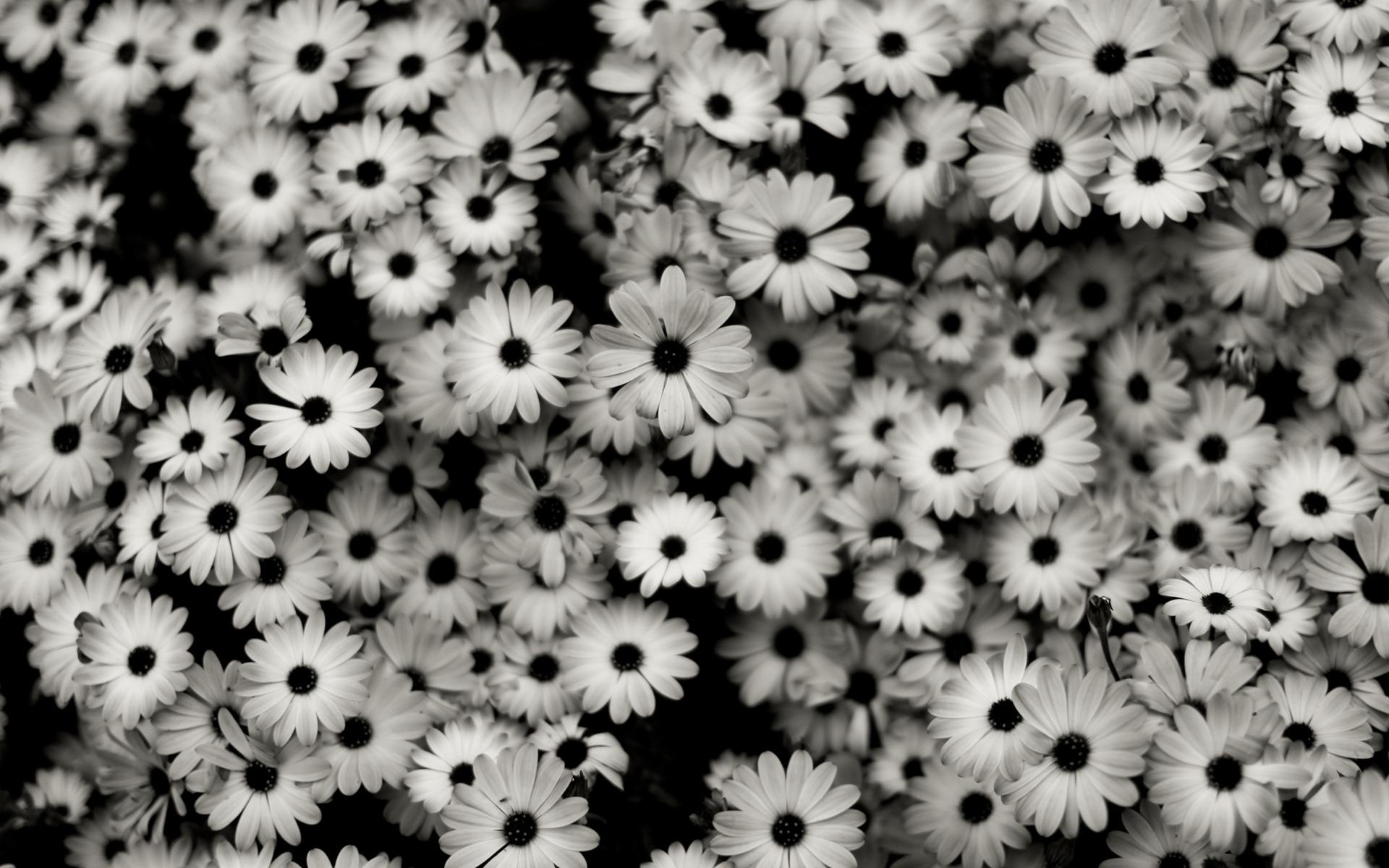 Обои цветы черно белые картинки