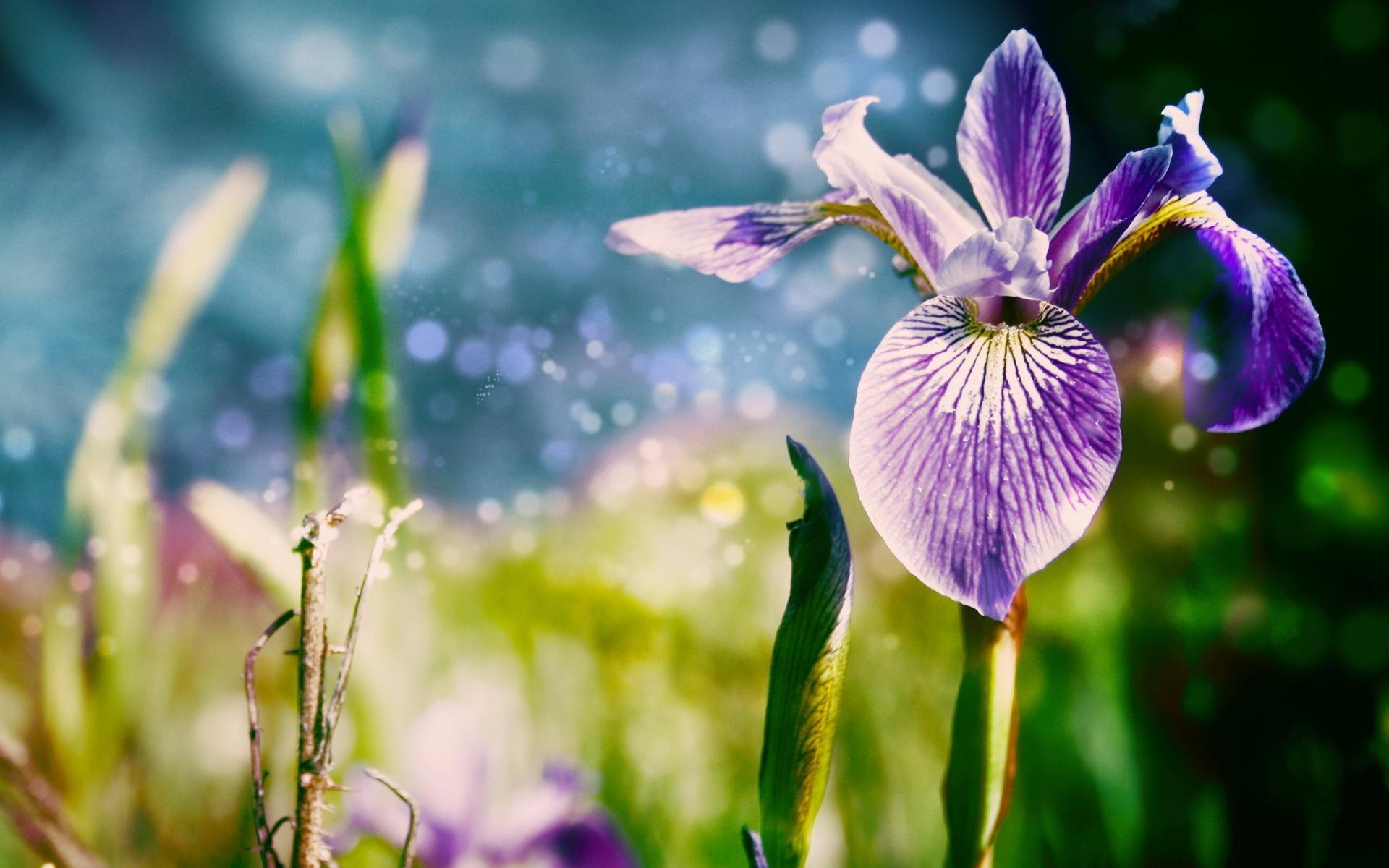 http://www.zastavki.com/pictures/1920x1200/2011/Nature_Flowers_Irises_026753_.jpg