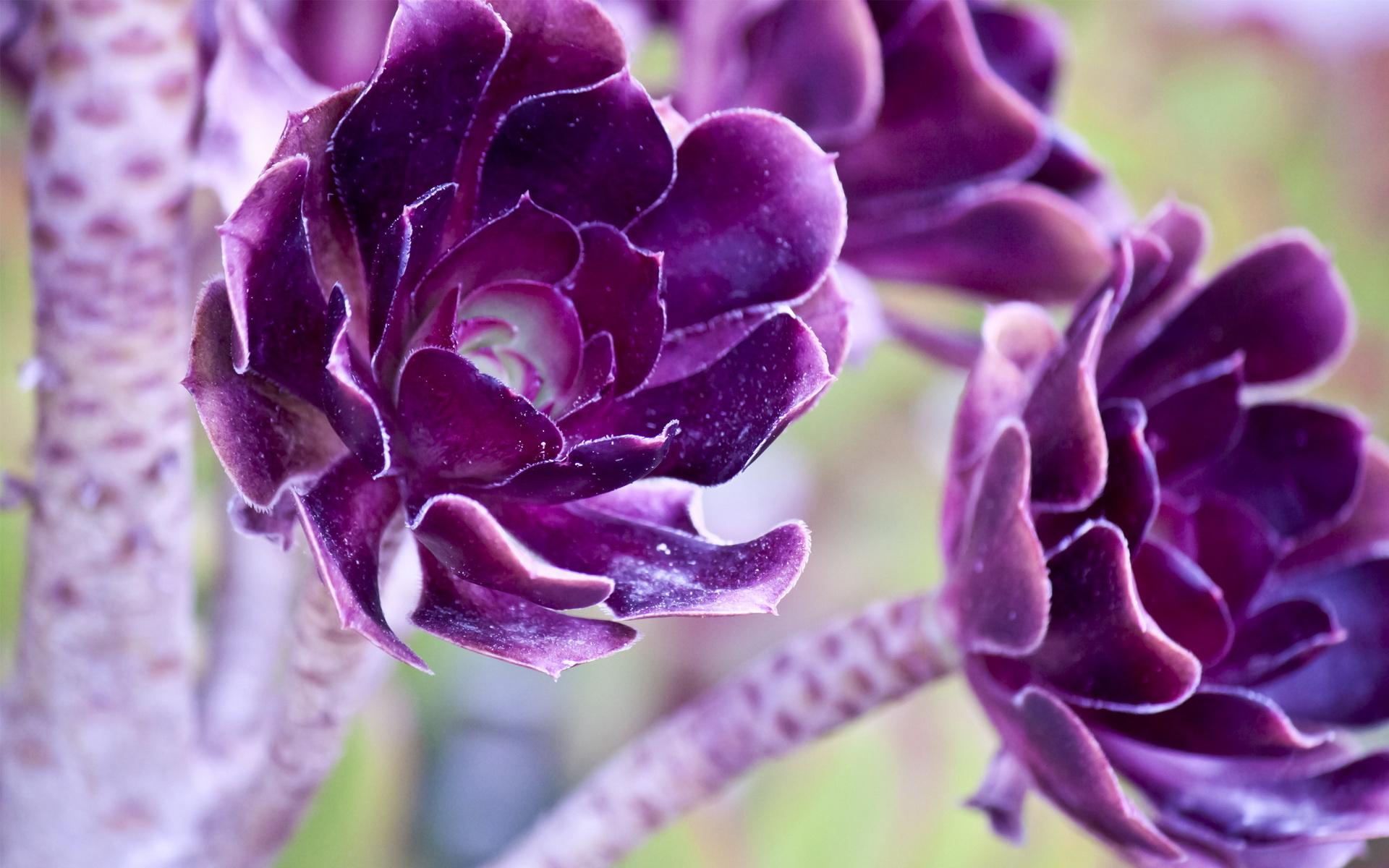 Фиолетовые картинки на рабочий стол, тему сказки