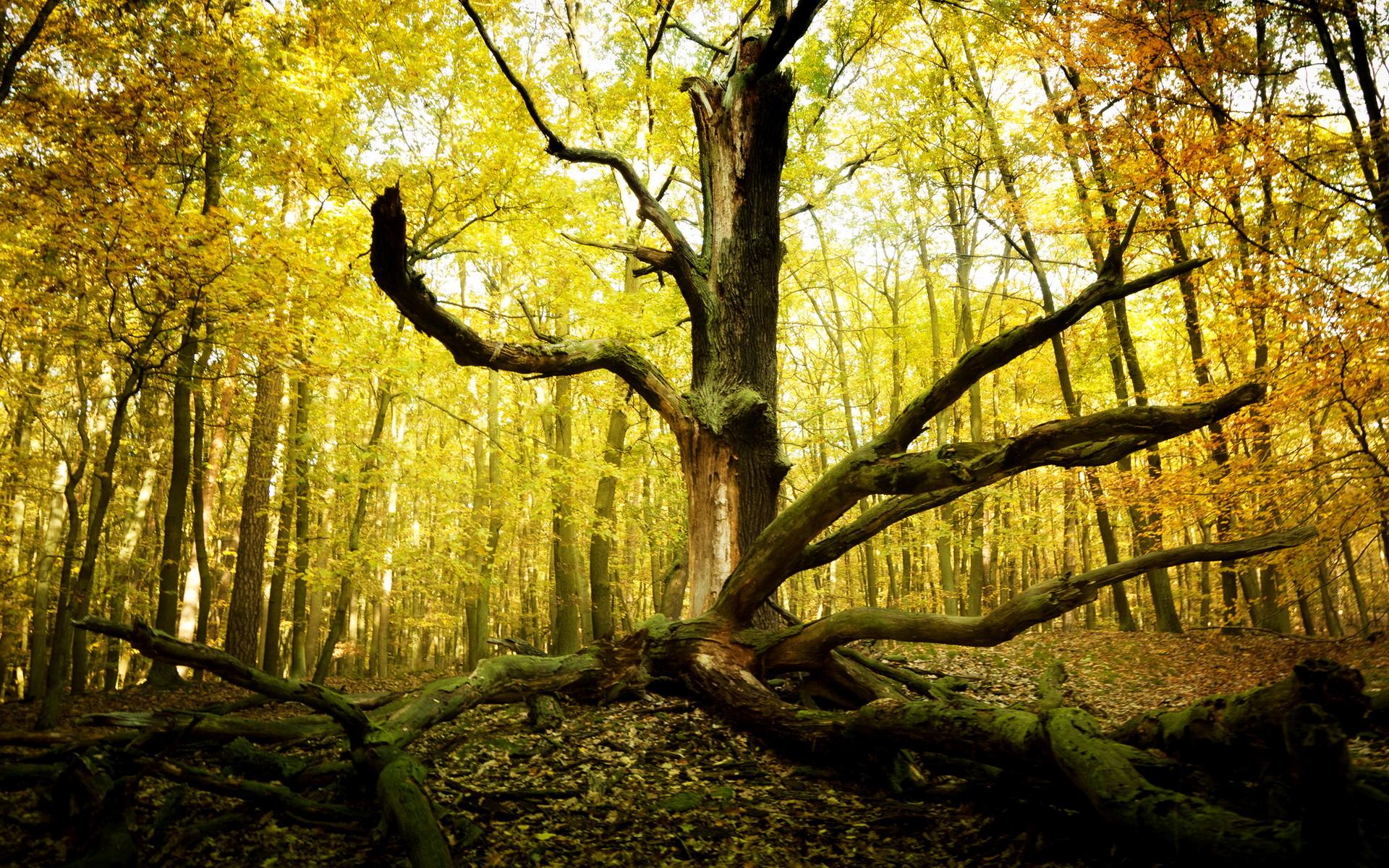"""arboles men El árbol del tule, spanish for """"the tree of tule"""", is a mighty montezuma cypress located in the town center of santa maría del tule in the m."""