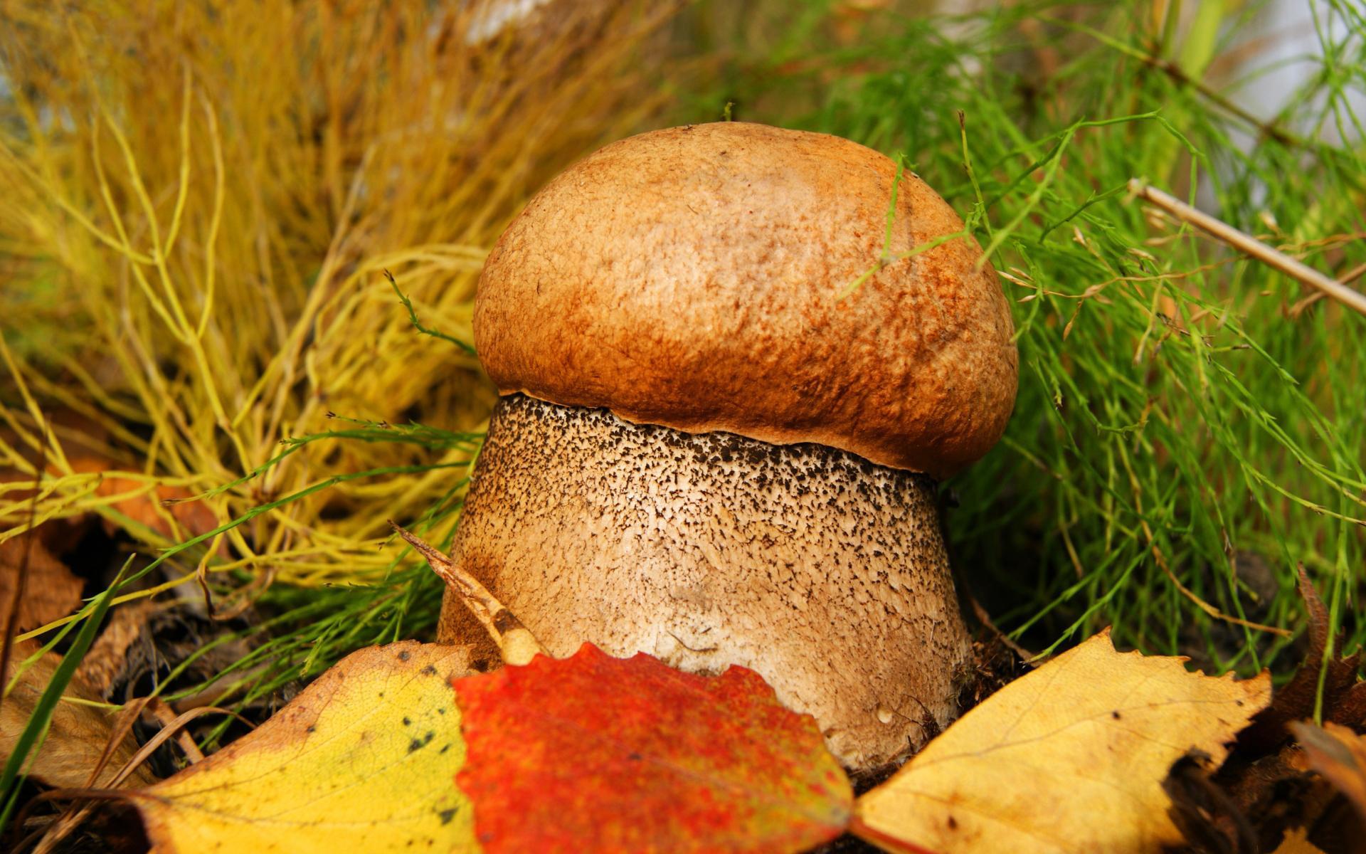 салона выбежала грибы обои и картинки на рабочий кажется, прожили тобой