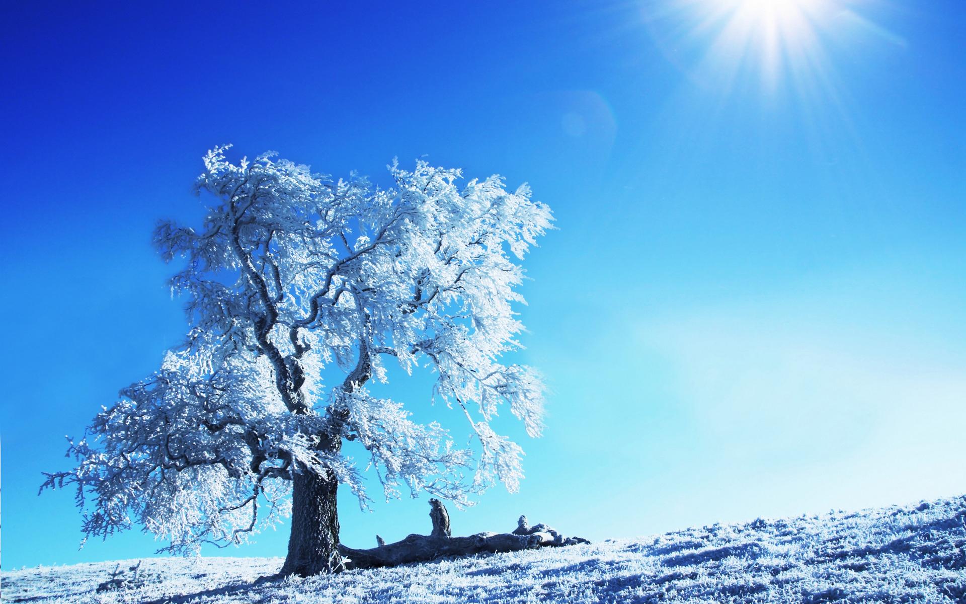 Winter winter wallpaper view snow blizzard trees nature tree