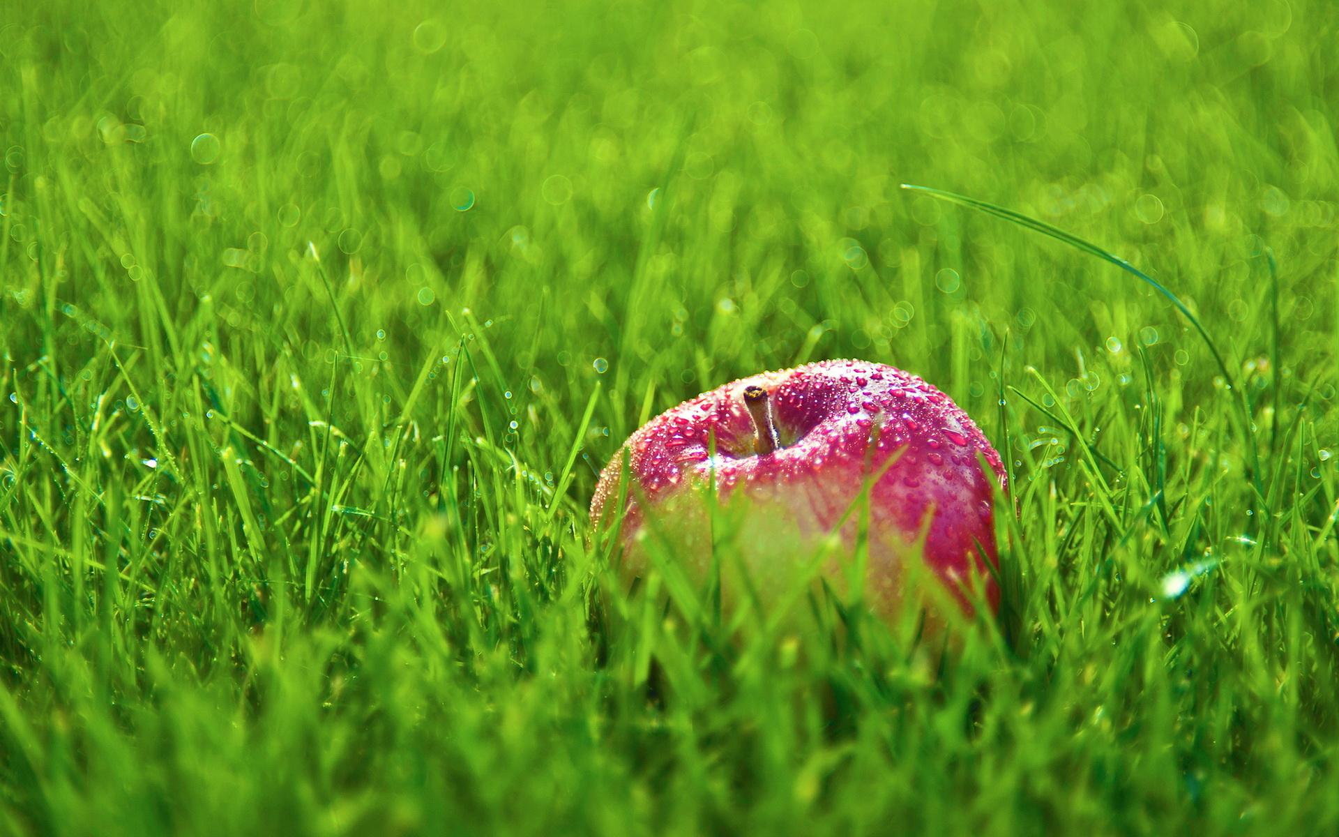 apple fruit background grass - photo #7