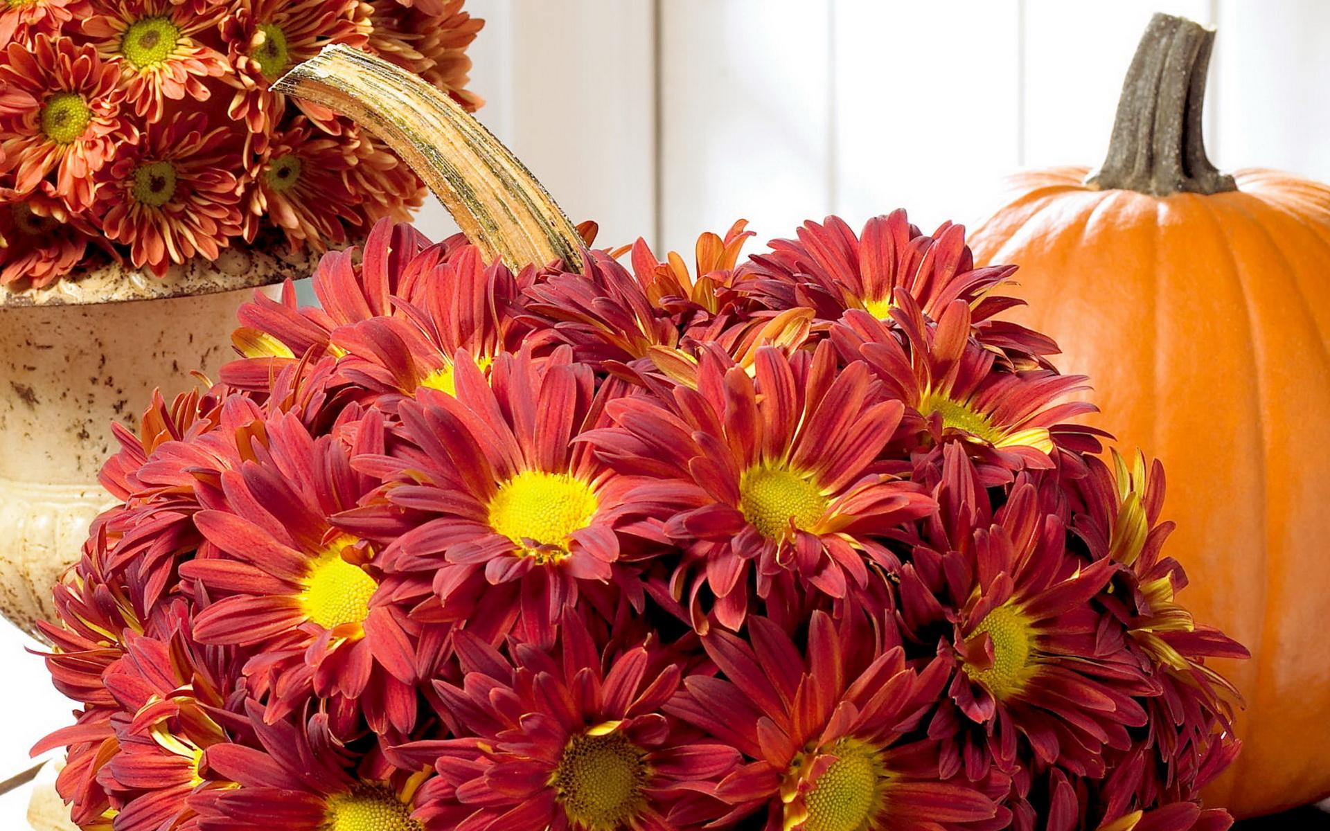 Картинки осенние цветы на рабочий стол хорошее качество, нет алкоголю картинка