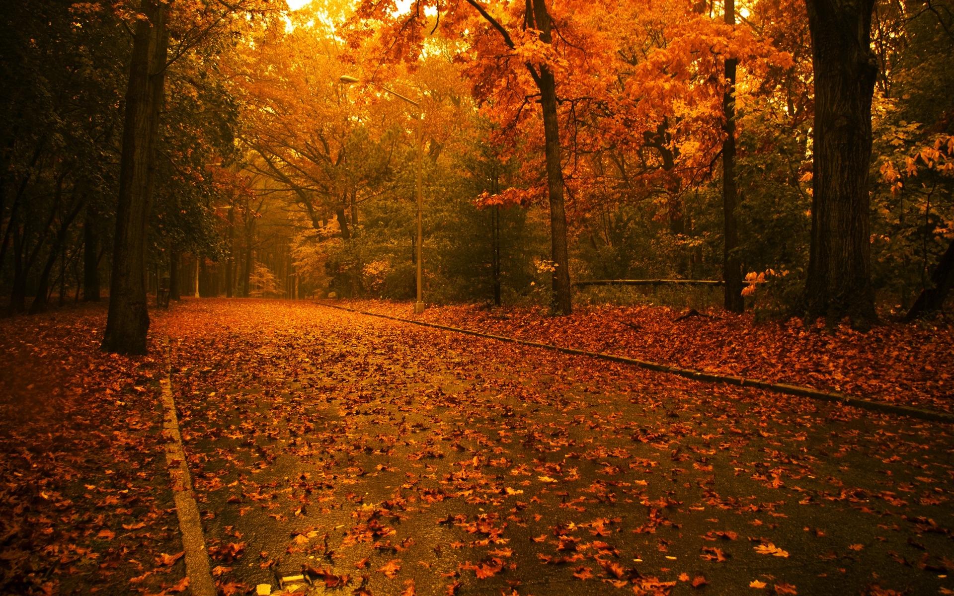 Осень в парке обои для рабочего стола
