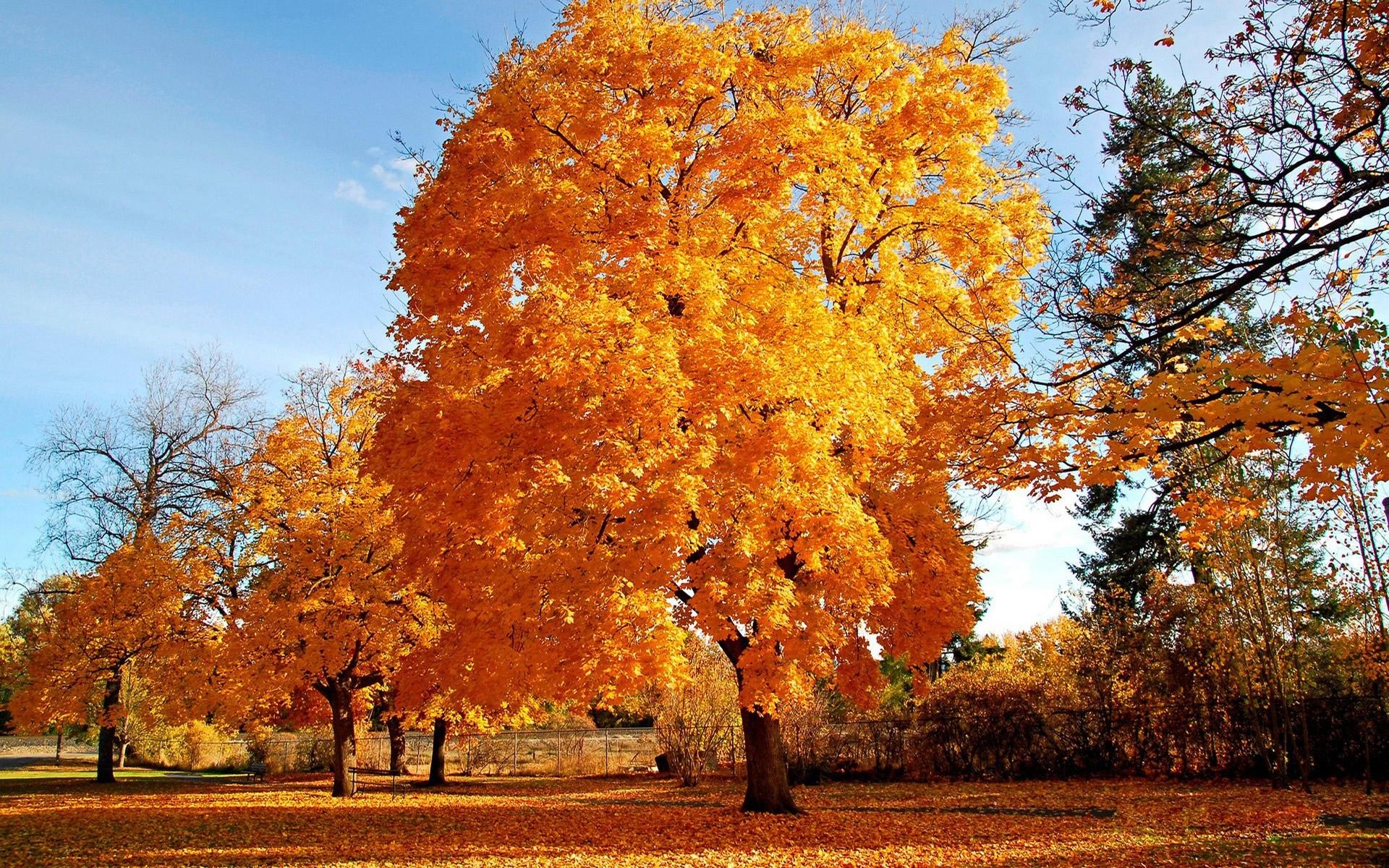 Картинки по запросу осенние деревья