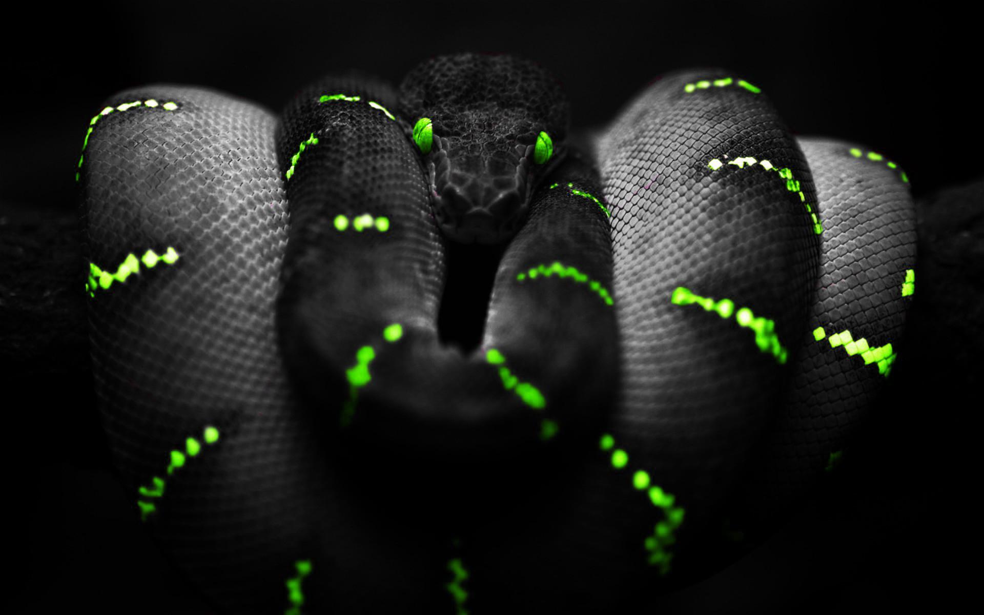 Black Python On The Wallpaper Desktop Wallpapers 1920x1200
