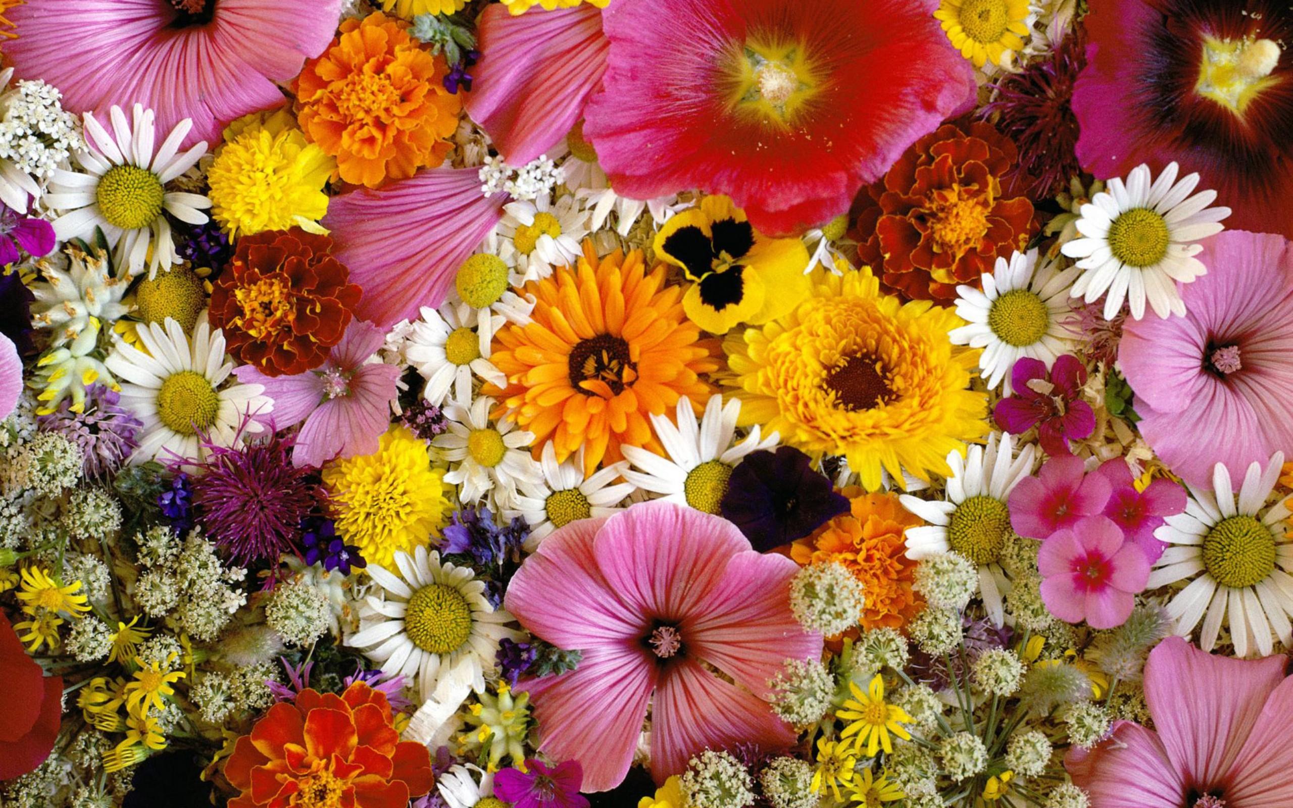 """Скачать  """"Цветочки для любимой дочки """" ."""