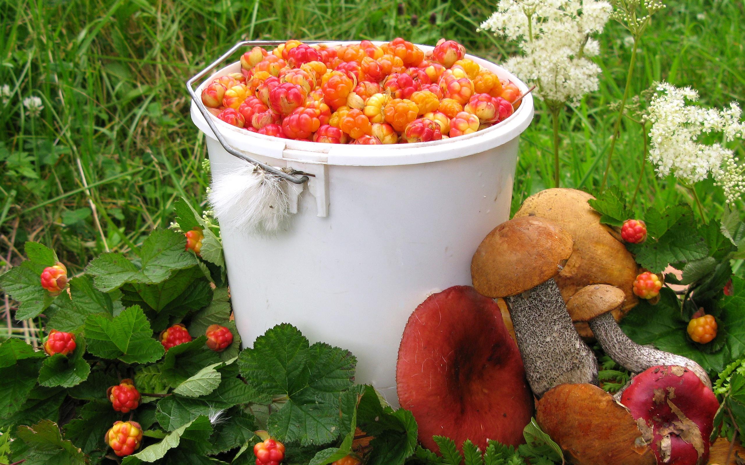 Надписью, картинки собирать грибы и ягоды