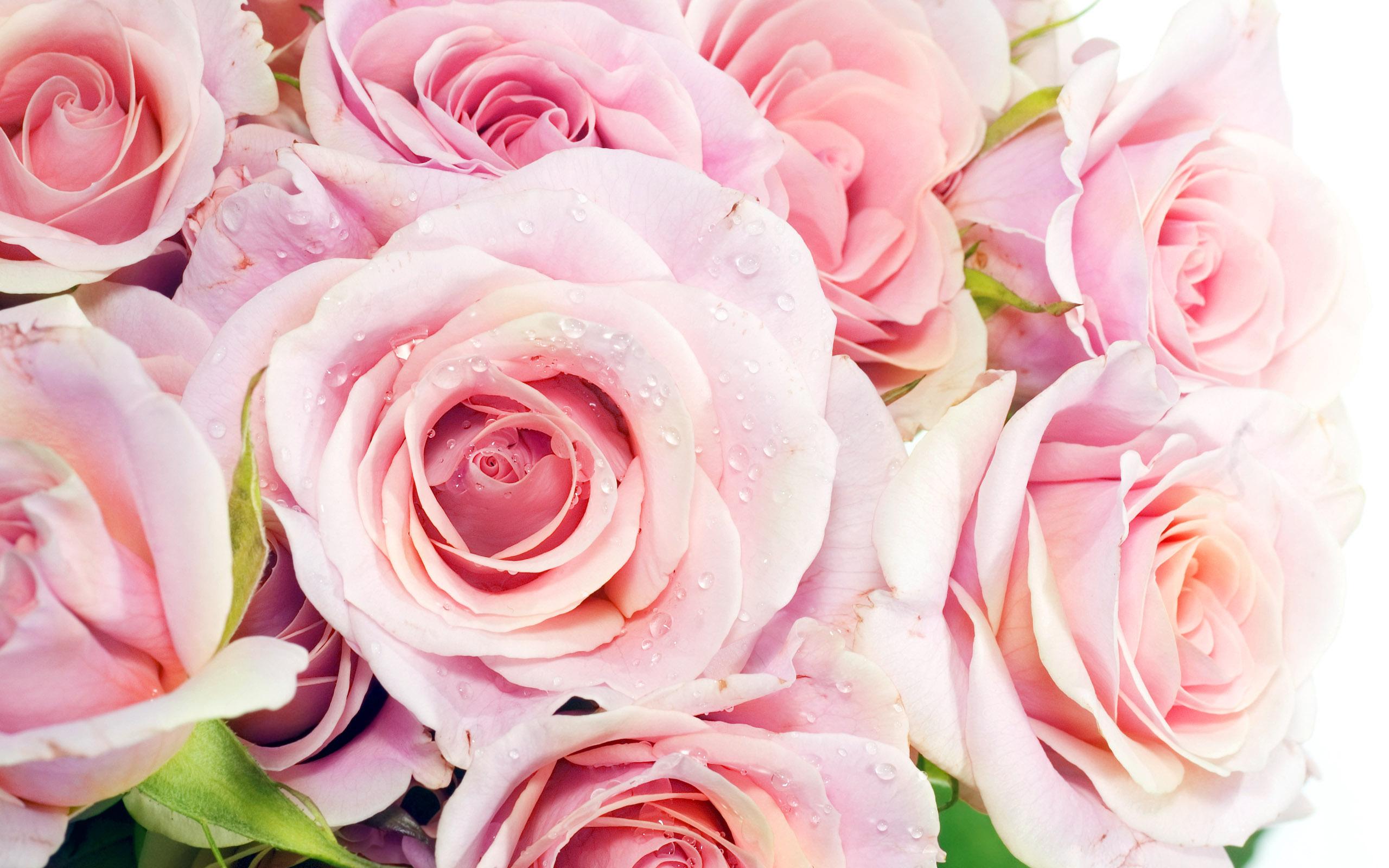 Анимация мужчине, красивые картинки с цветами розы