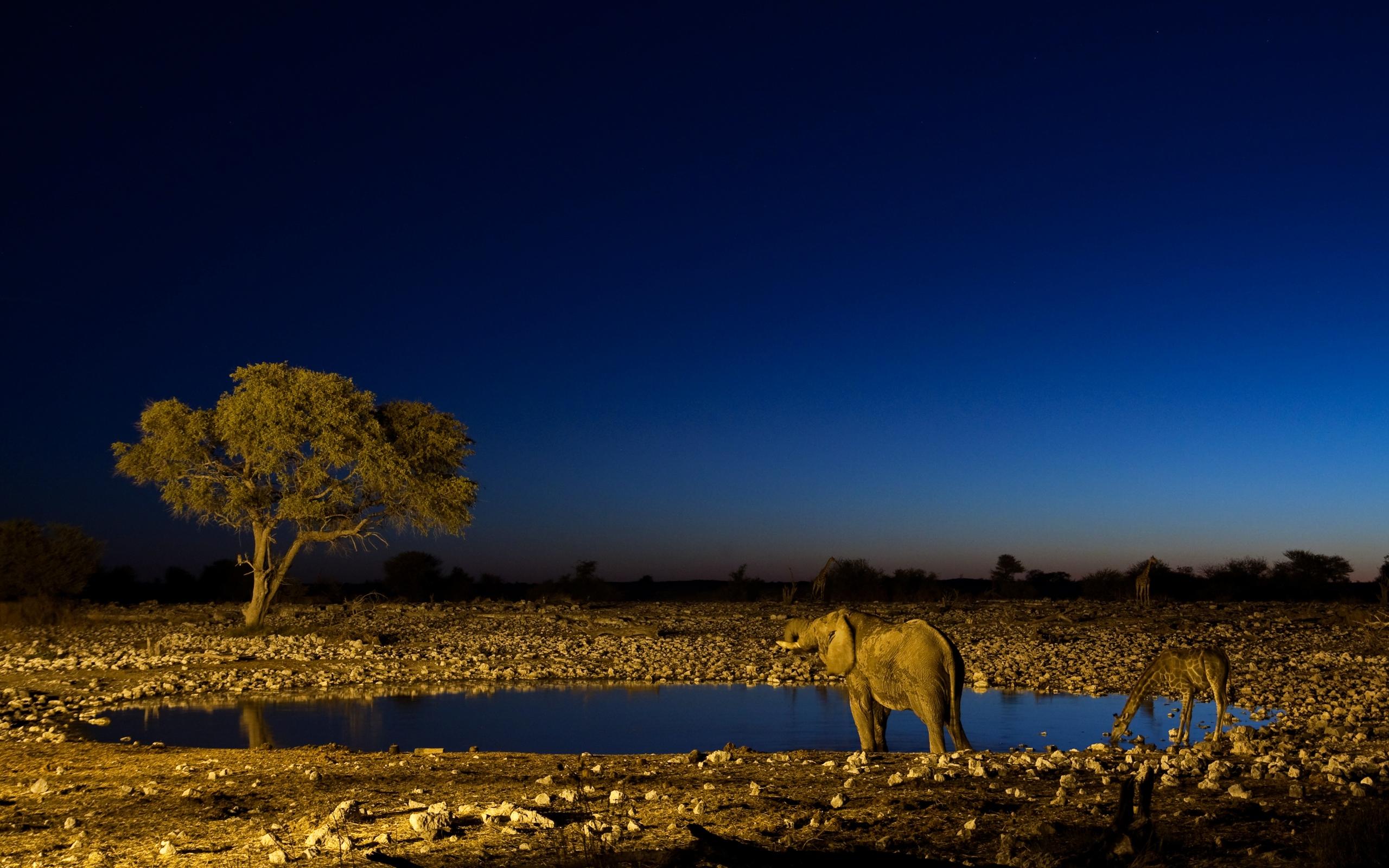 замужество руслановой африка ночью фото платье, связанное
