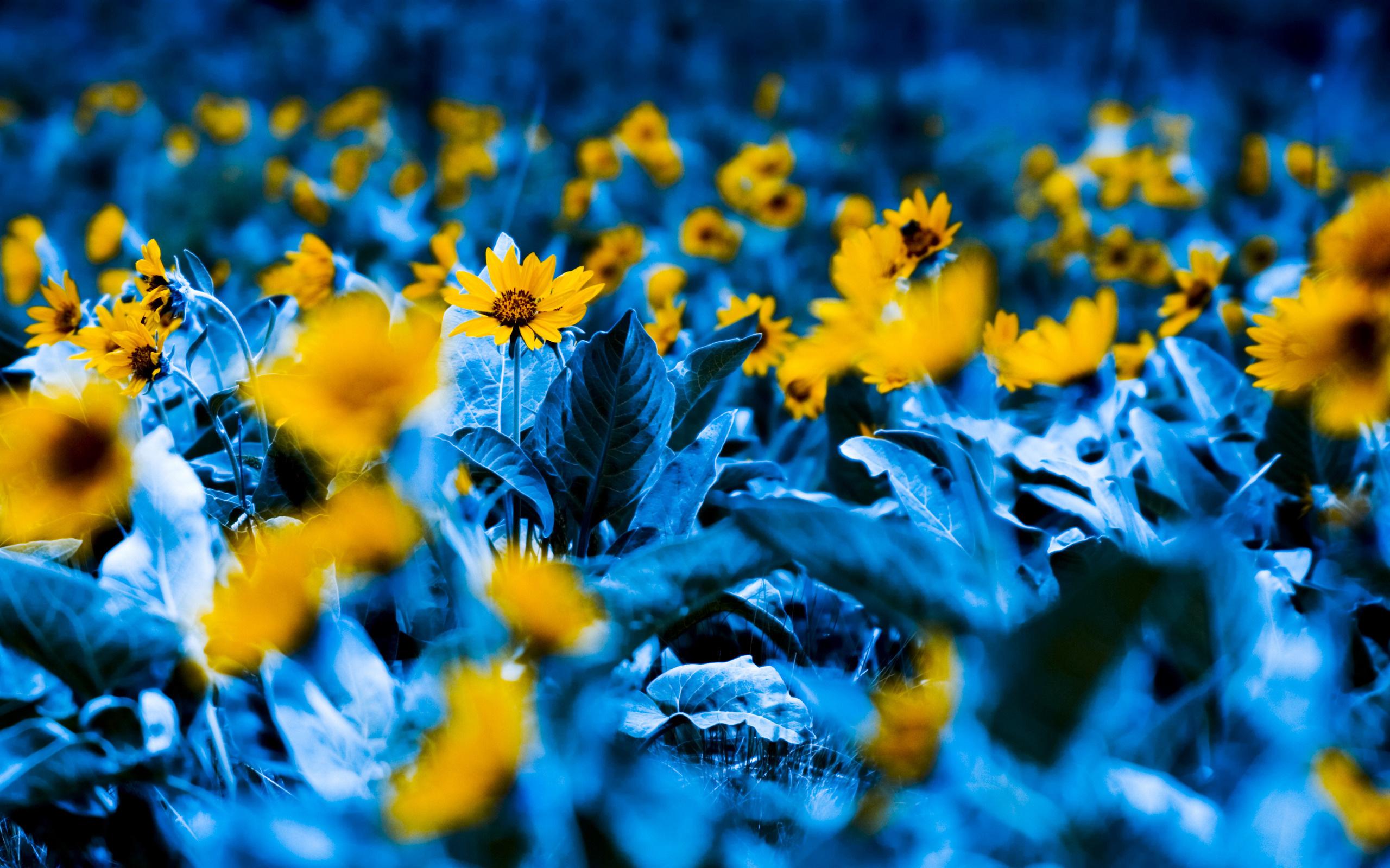 Фото желтых и голубых цветов