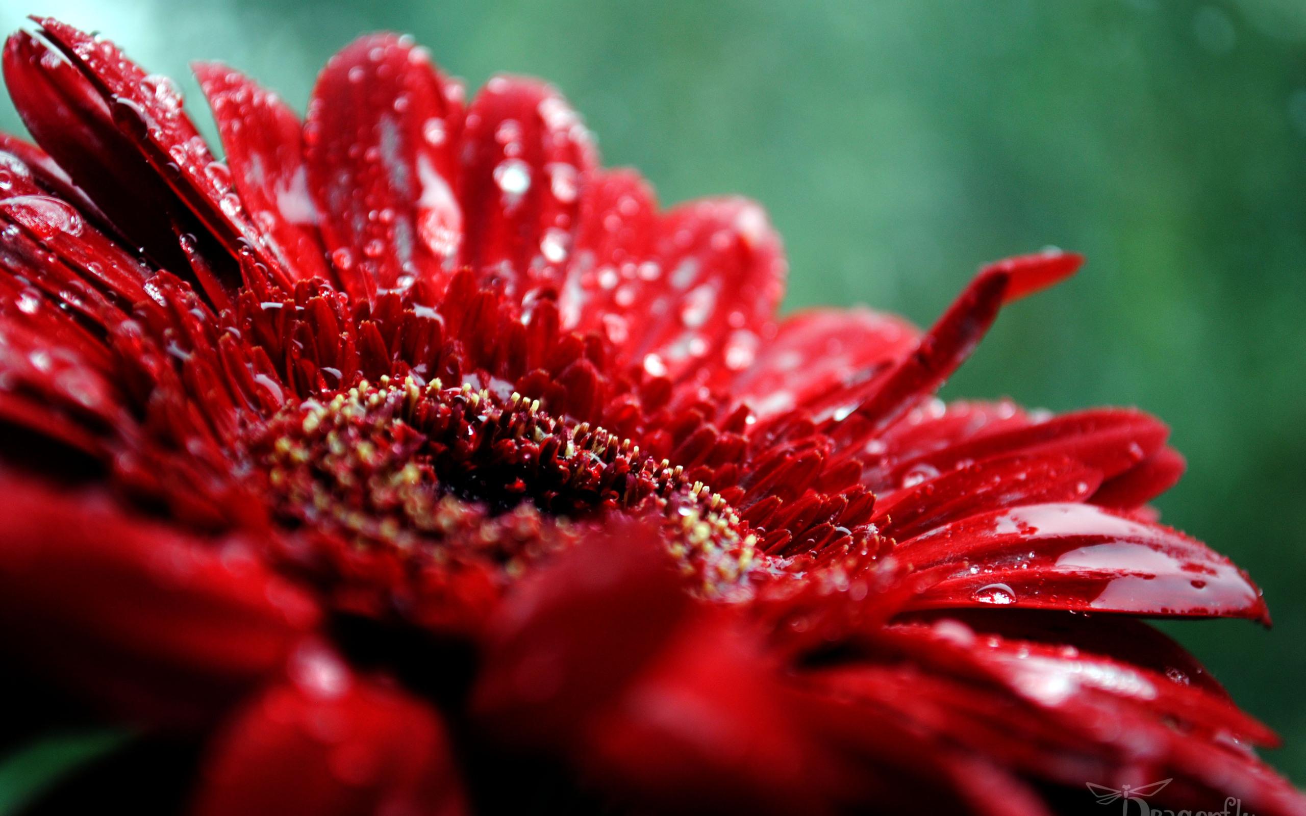 Красивое для рабочего стола цветы