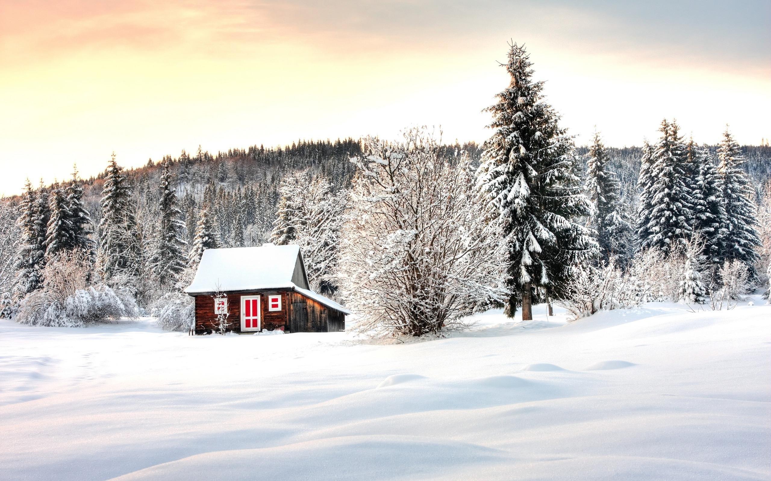 Красивый зимний пейзаж картинки в лесу