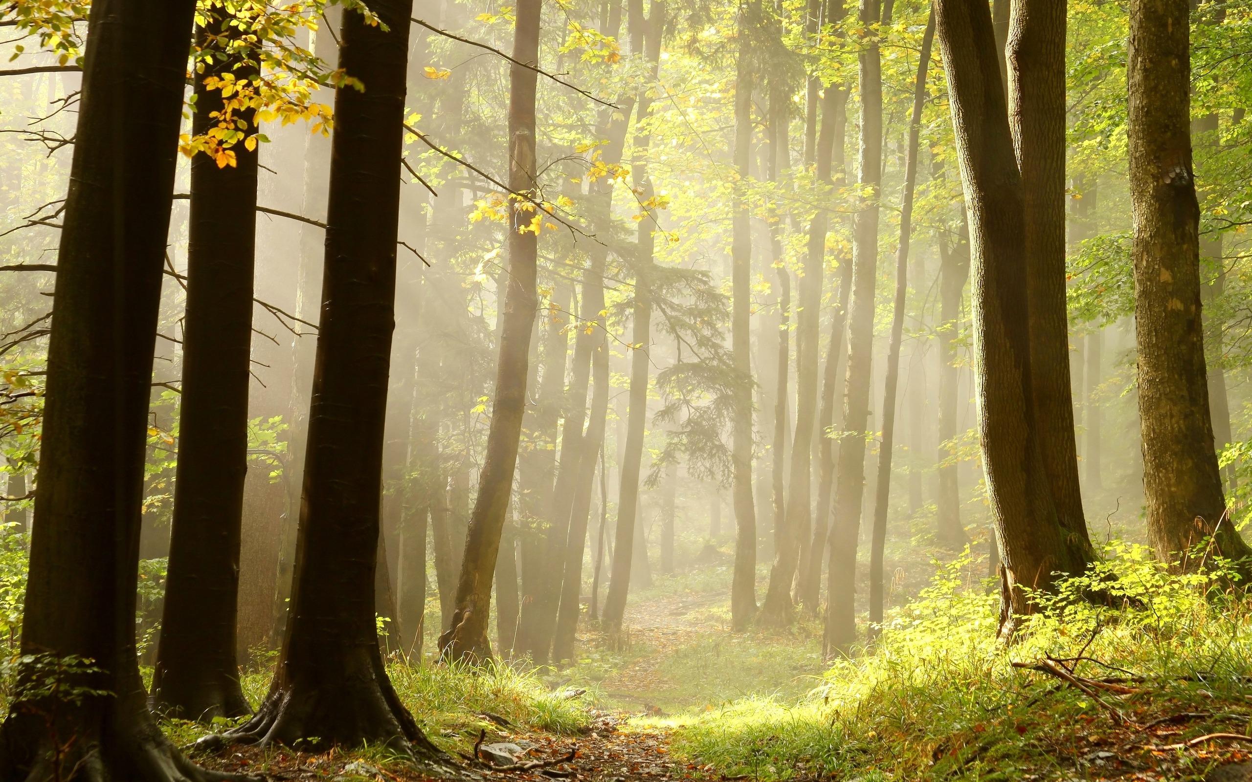 фото на фоне леса - 1