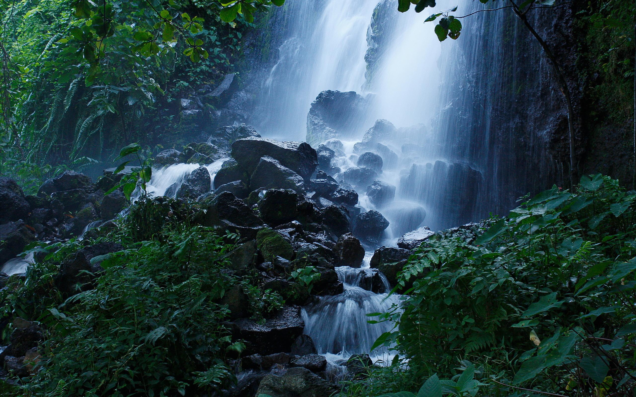 картинки леса с водопадом