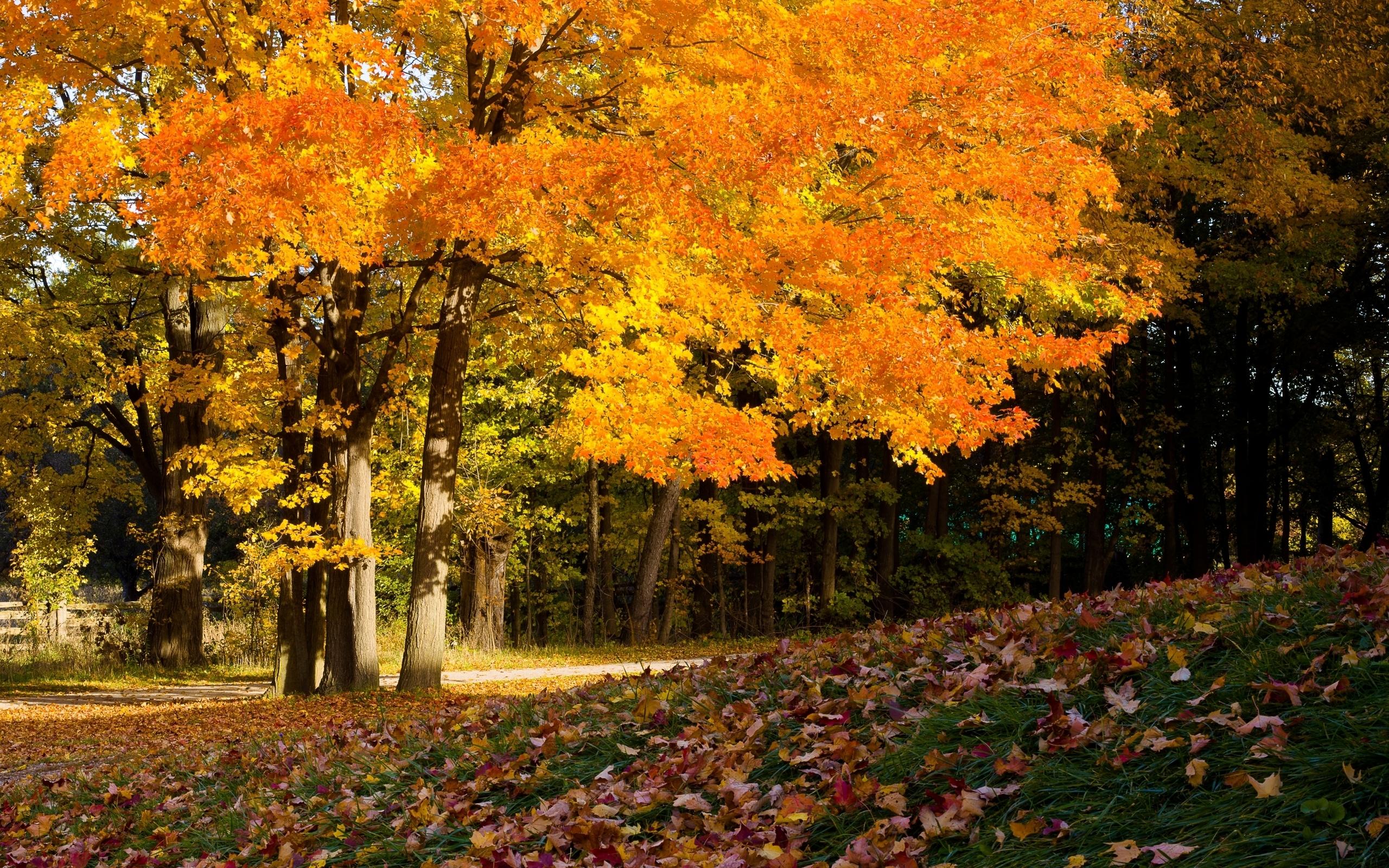 цветущие мой мир фото осени уроков обычной