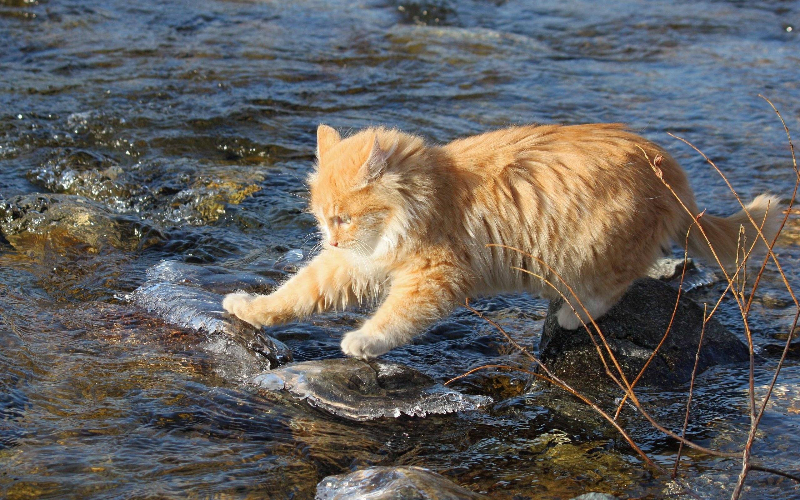 кот ловит воду
