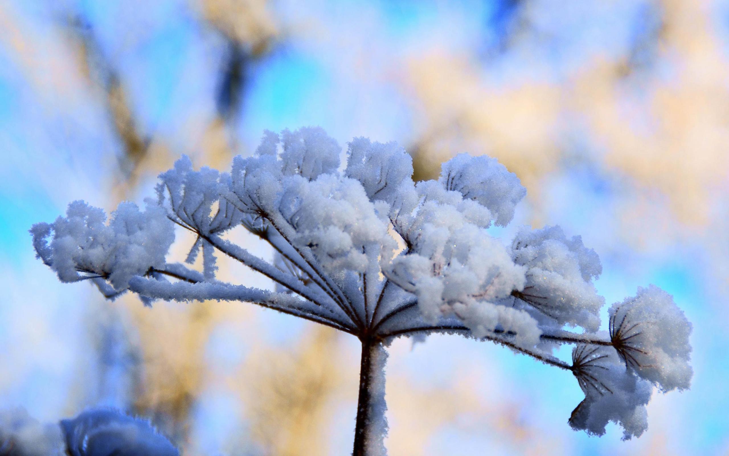 Снежные цветы картинки 2